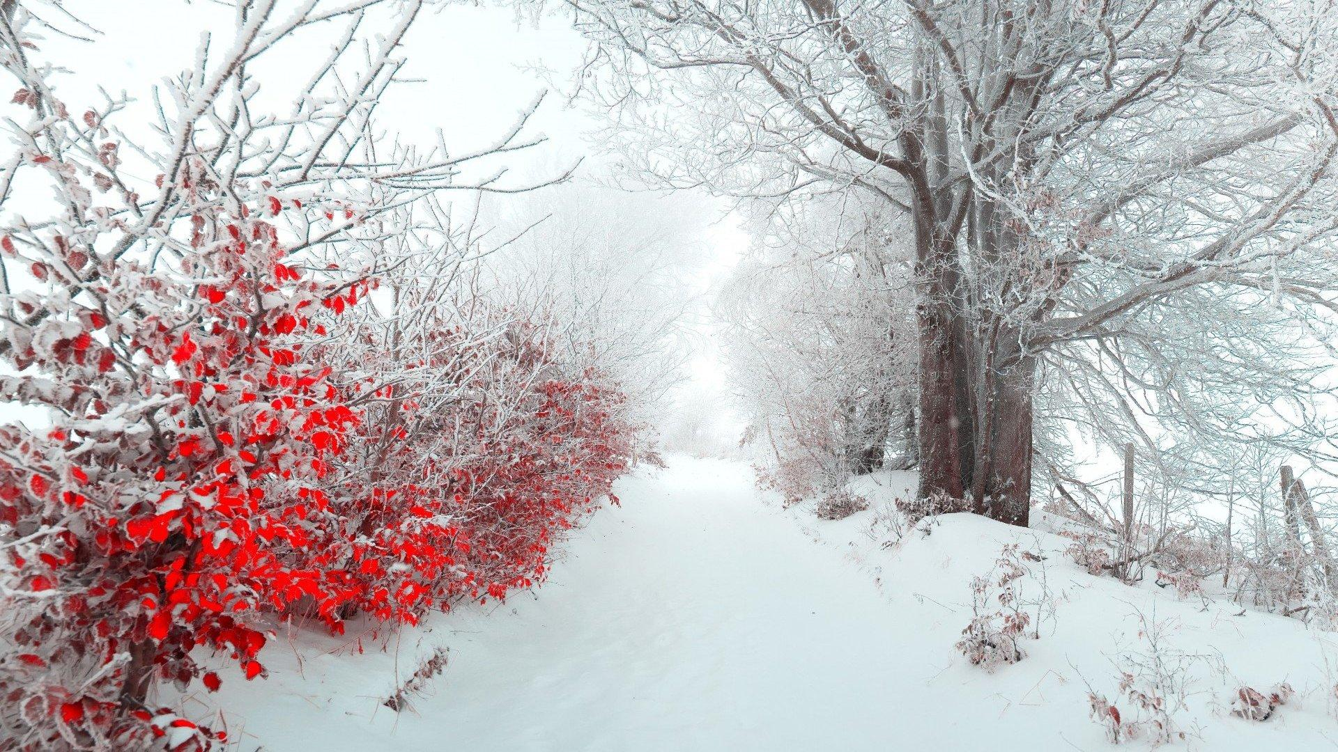 Colorful Winter Wallpapers - Wallpaper Cave