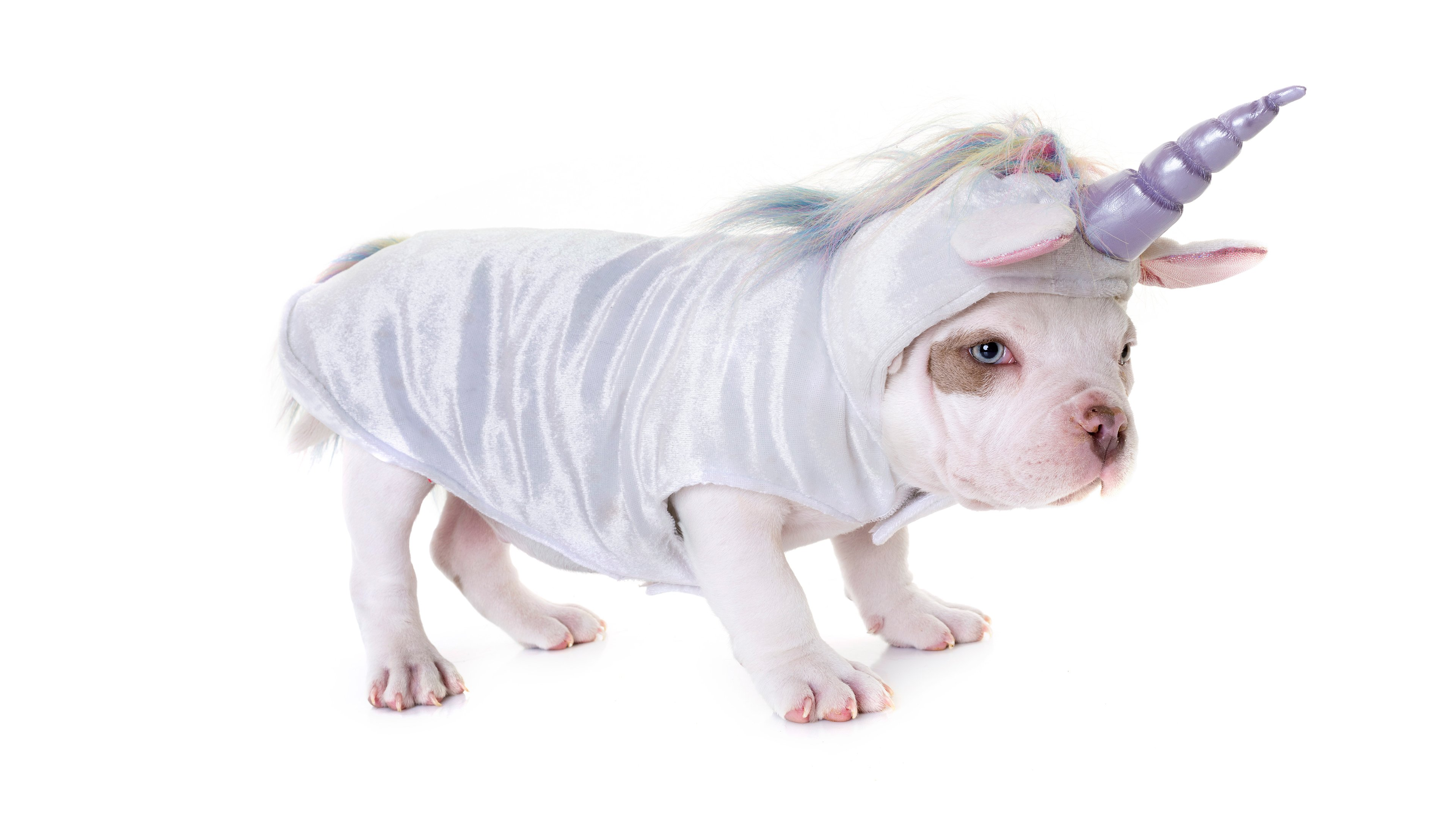 Unicorn Puppies Wallpapers - Wallpaper Cave
