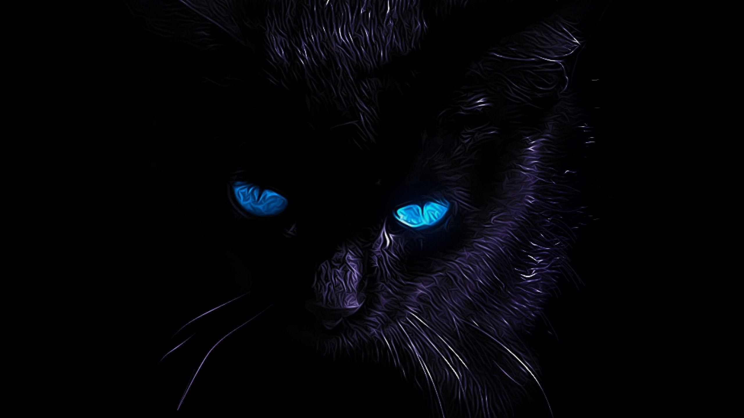 Blue Eyes Cat Wallpapers Wallpaper Cave