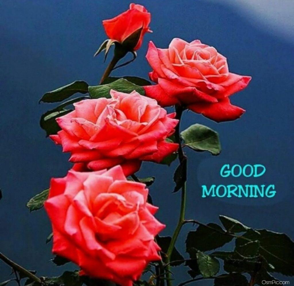 Morning Flower Wallpapers Wallpaper Cave