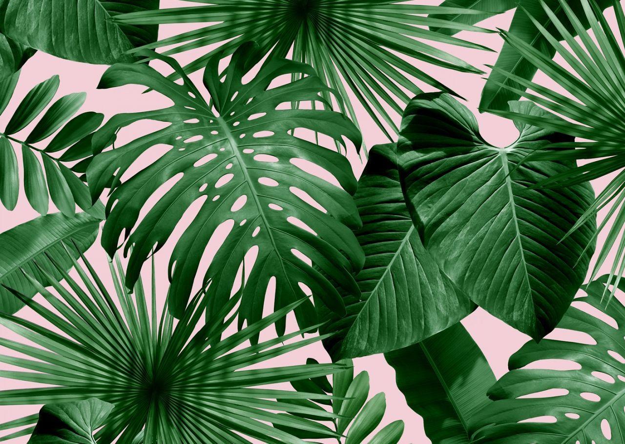 Desktop Leaves Wallpapers Wallpaper Cave Tropical leaves free background free photo. desktop leaves wallpapers wallpaper cave
