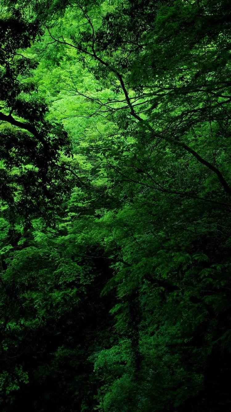 Green Nature Iphone Wallpapers Wallpaper Cave