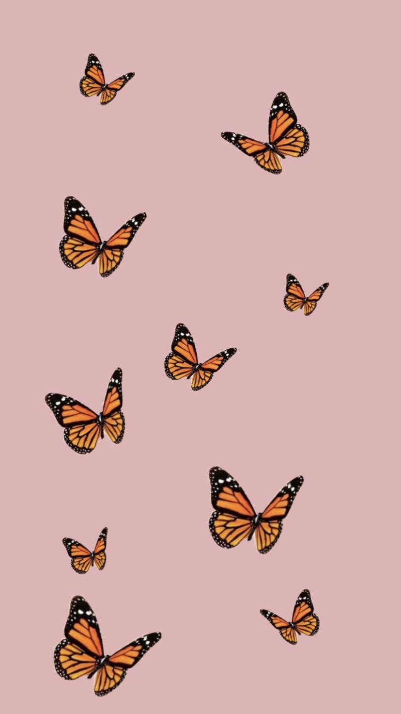Butterflies Aesthetic Wallpapers Wallpaper Cave
