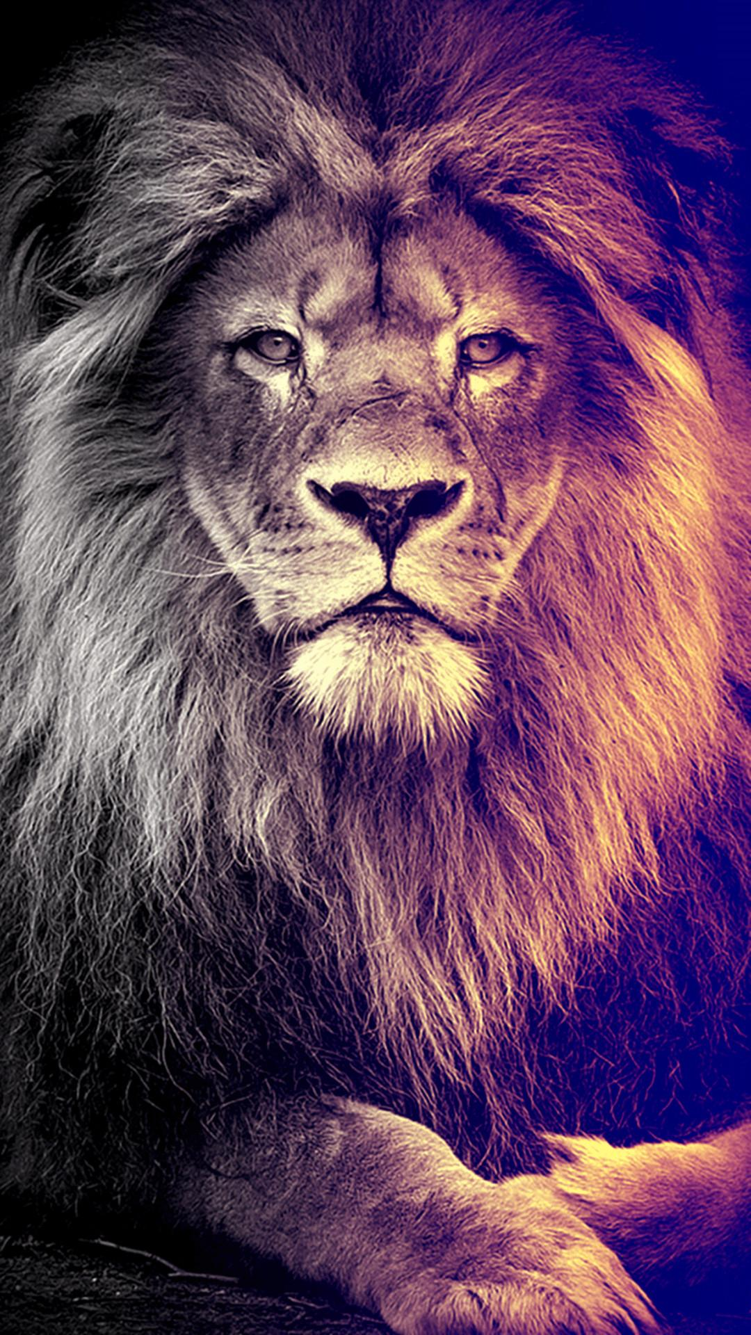Lion King Hd Iphone Wallpapers Wallpaper Cave