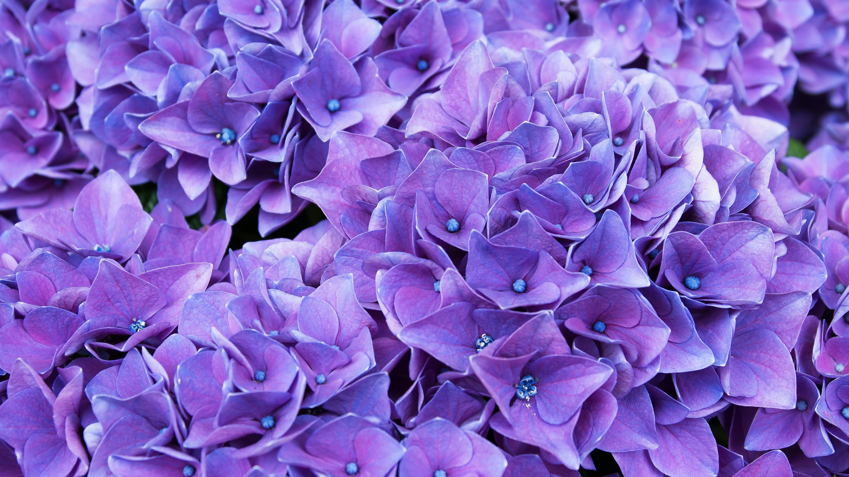 Violet Flower 4k Wallpapers Wallpaper Cave