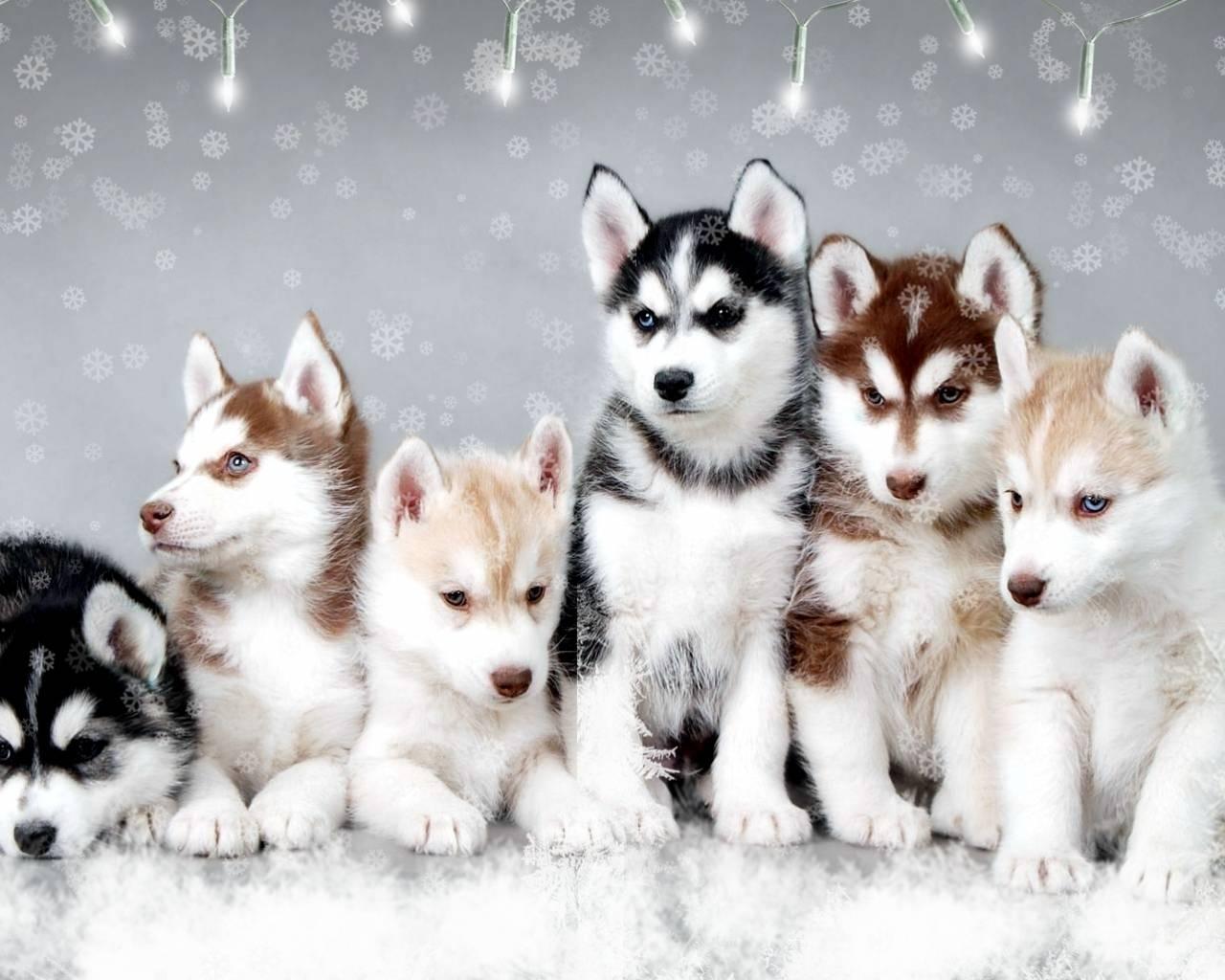 Winter Puppies Wallpapers - Wallpaper Cave