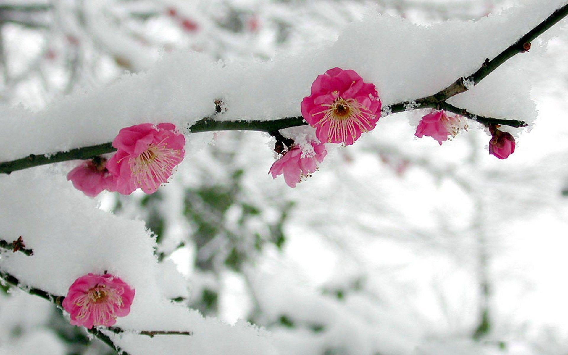 Snowy Flower Wallpapers , Wallpaper Cave