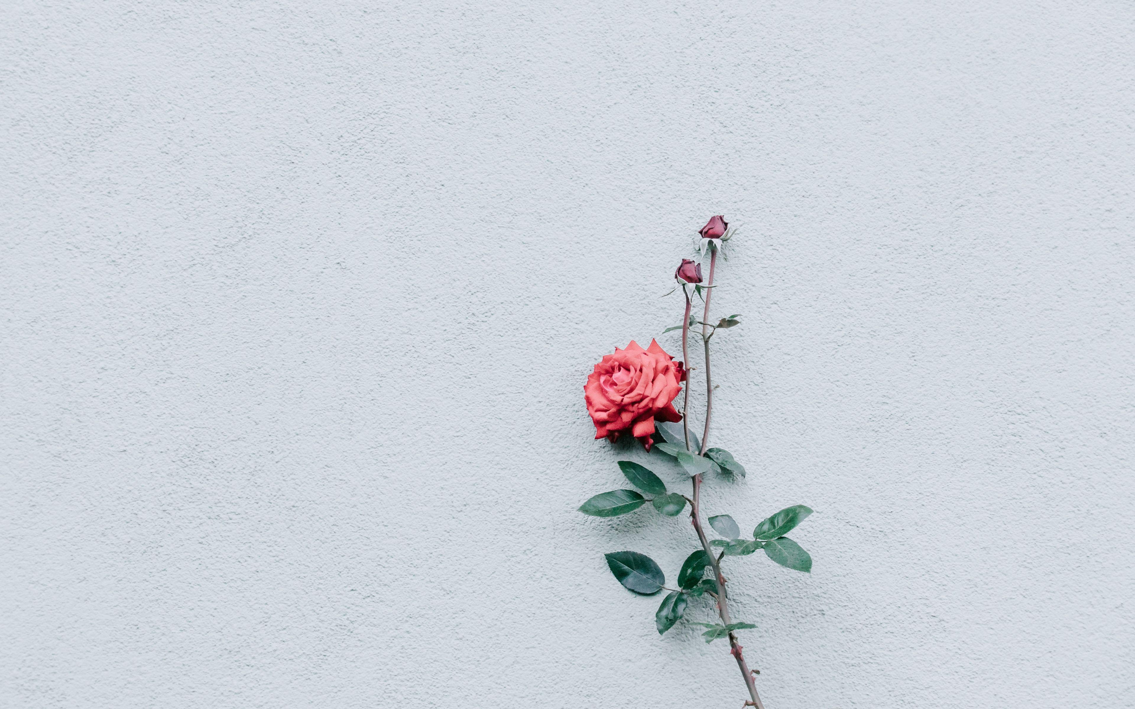 Minimal Flower Wallpapers - Wallpaper Cave