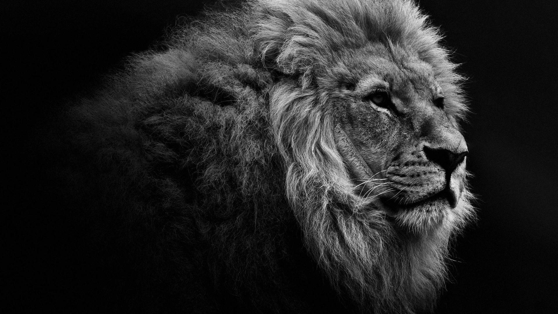 Desktop Hd Full Screen Lion Wallpapers - Wallpaper Cave