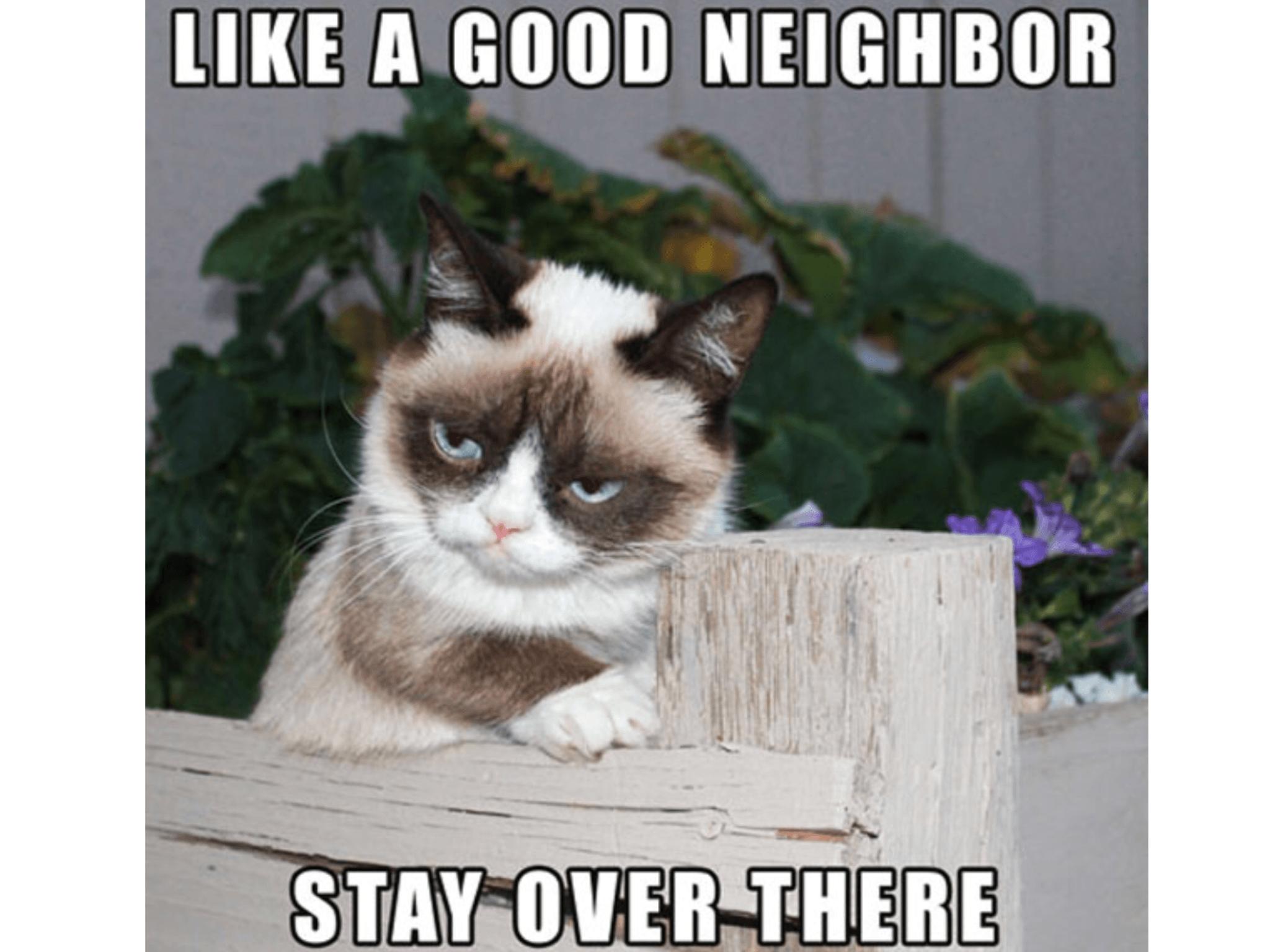Grumpy Cat Memes Wallpapers Wallpaper Cave