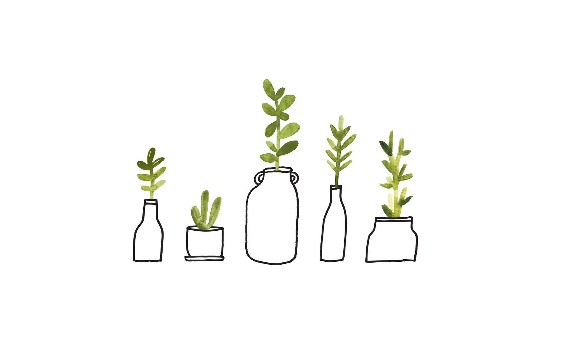 plant computer wallpapers