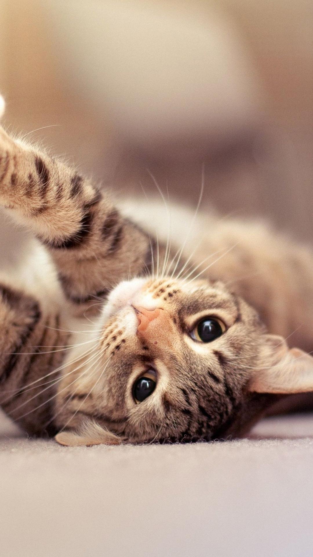 Cat Hd Iphone Wallpapers Wallpaper Cave