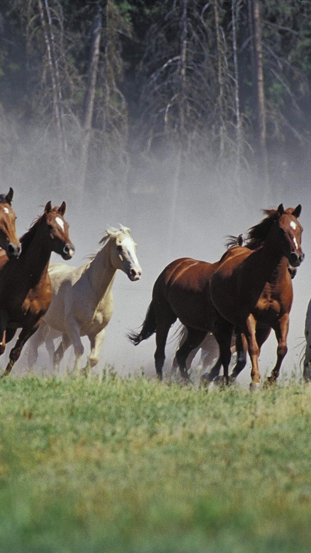 7 Horse Running Mobile Wallpapers Wallpaper Cave