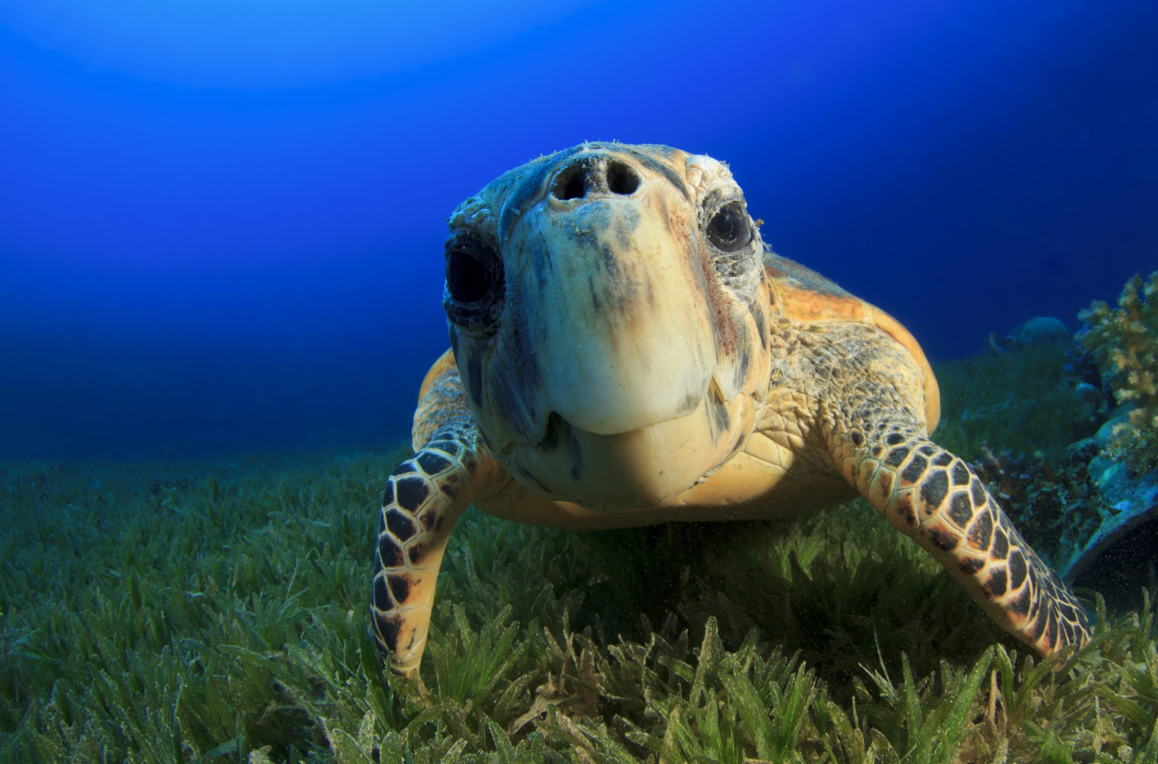 Sea Turtle Computer Wallpapers Wallpaper Cave