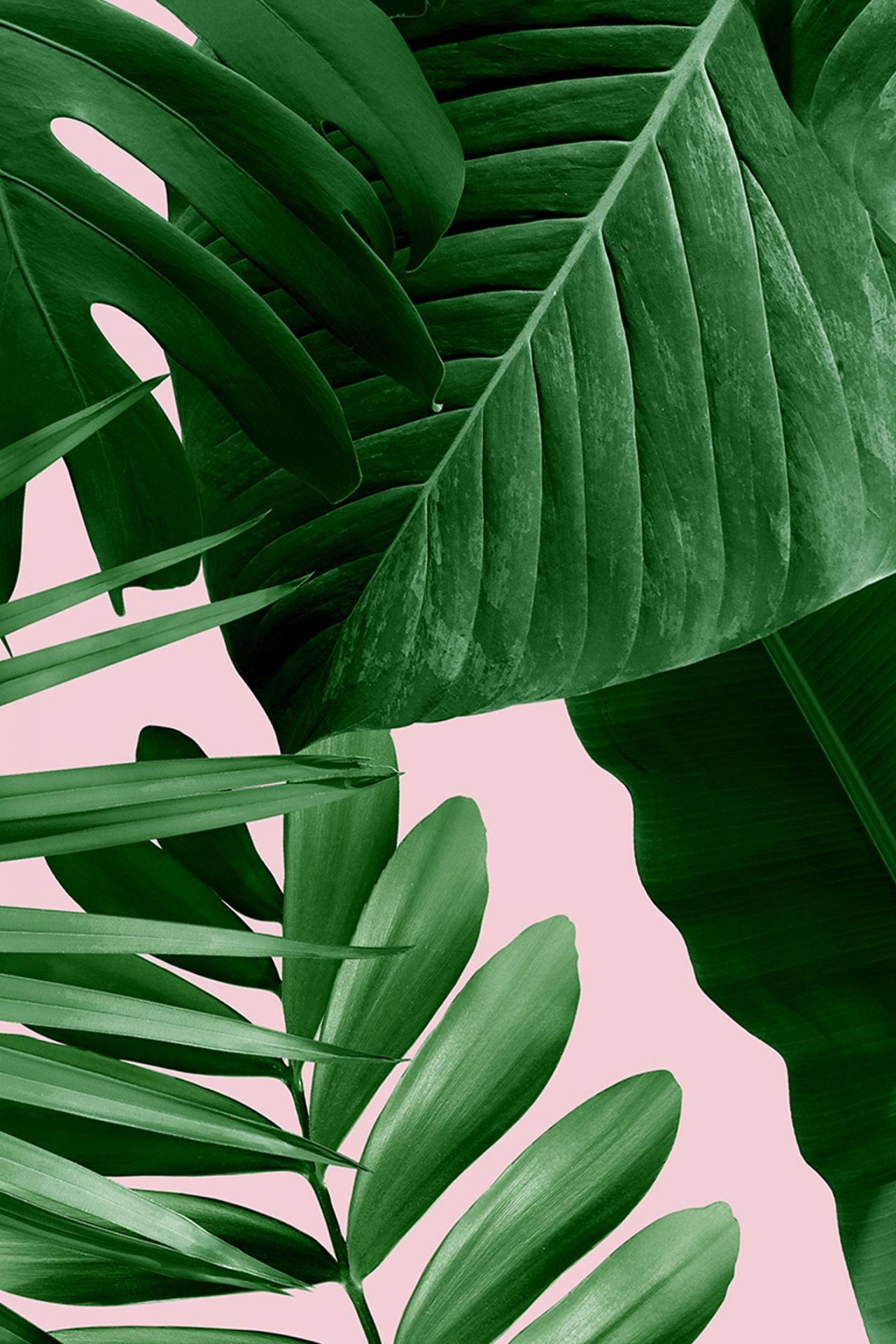 green leaf aesthetic wallpapers