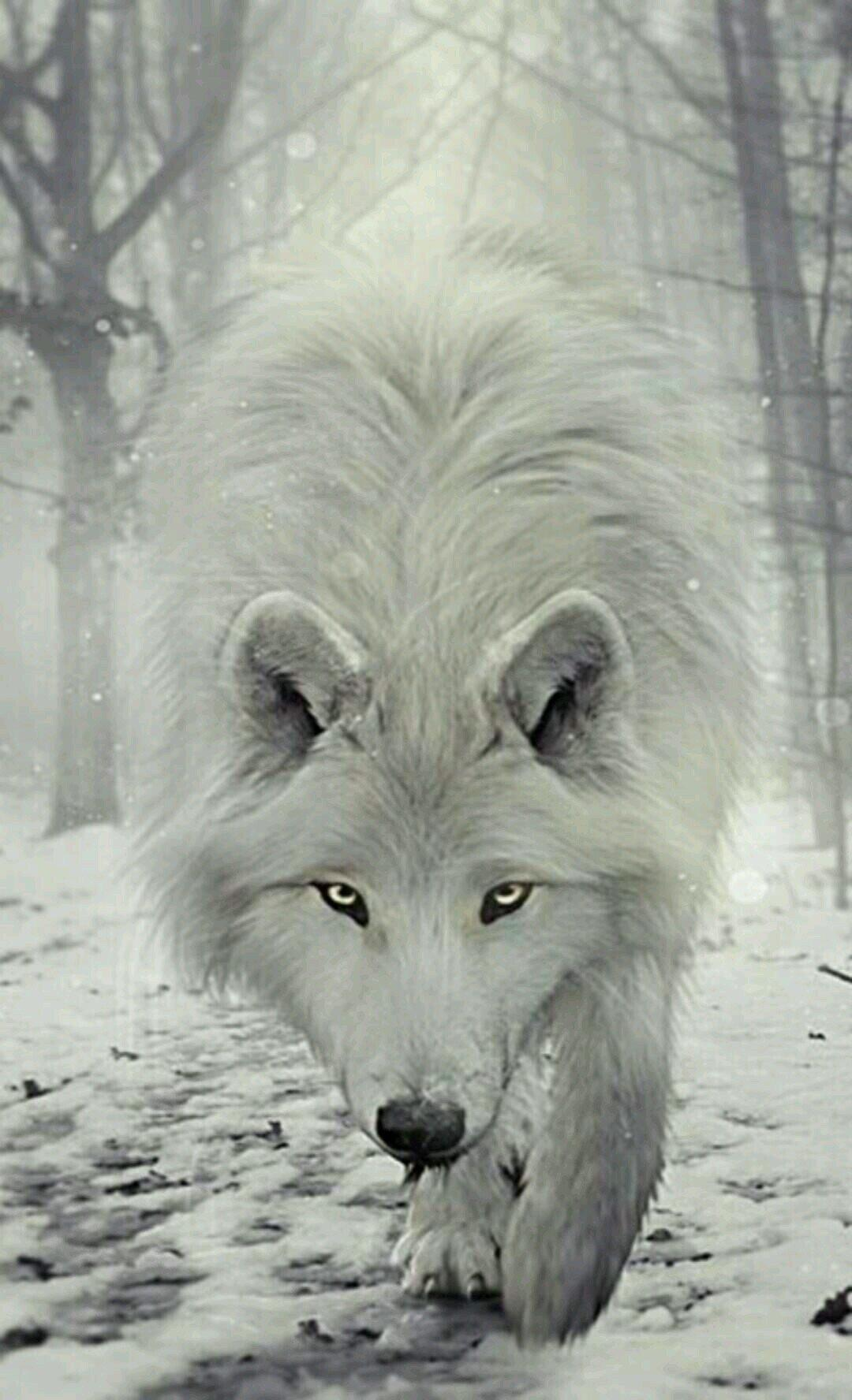 Wolves In Snow Wallpapers Wallpaper Cave