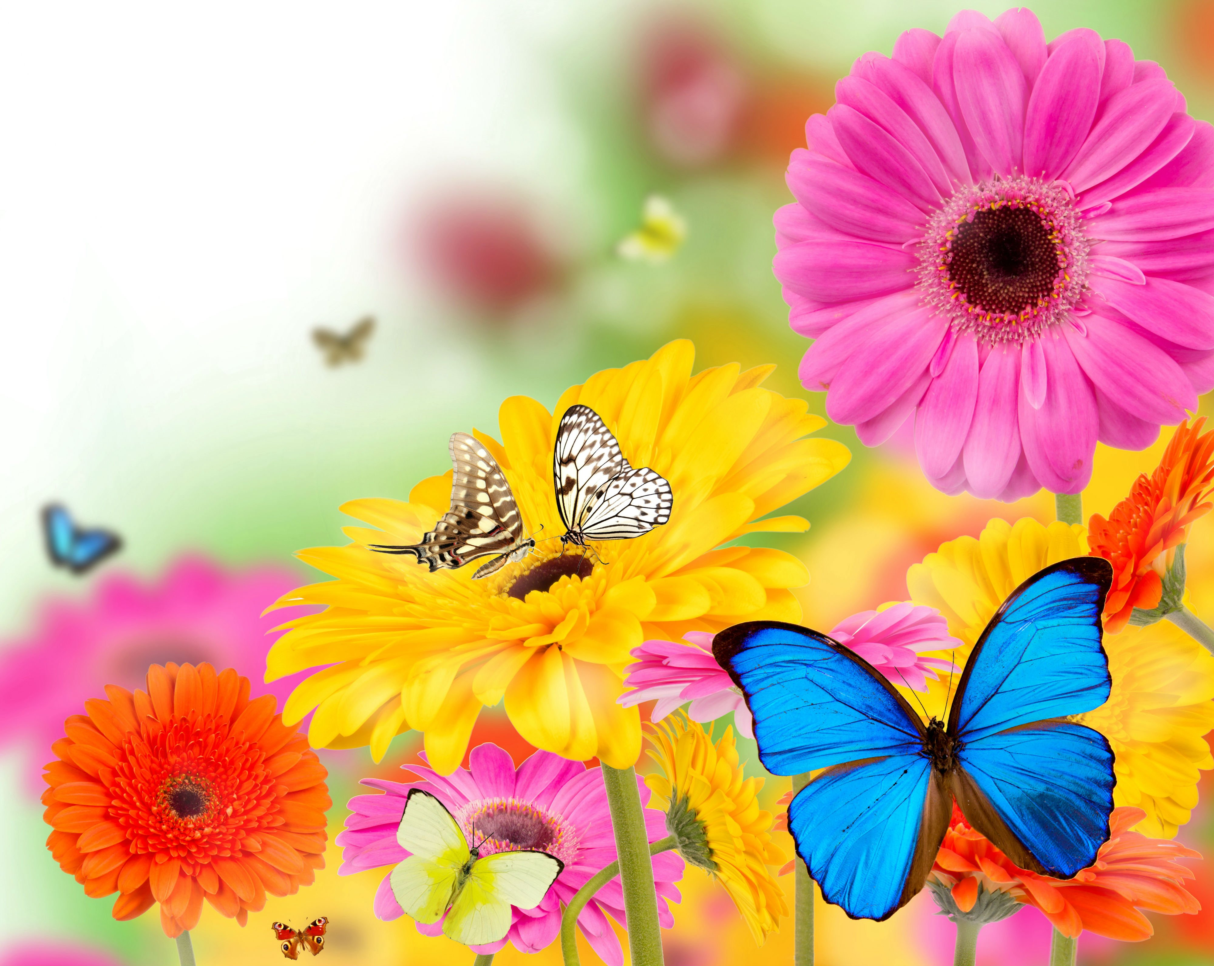 Butterfly Spring Blossom Wallpapers Wallpaper Cave