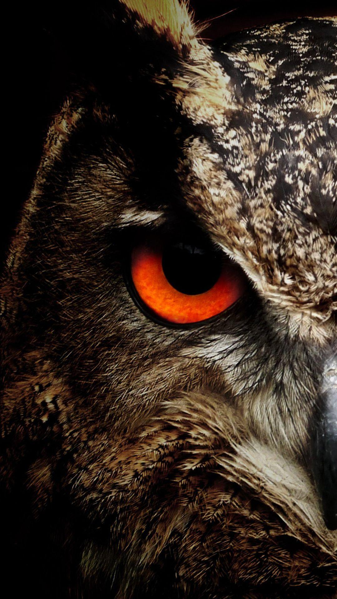 Flying Owl Hd Android Wallpapers - Wallpaper Cave