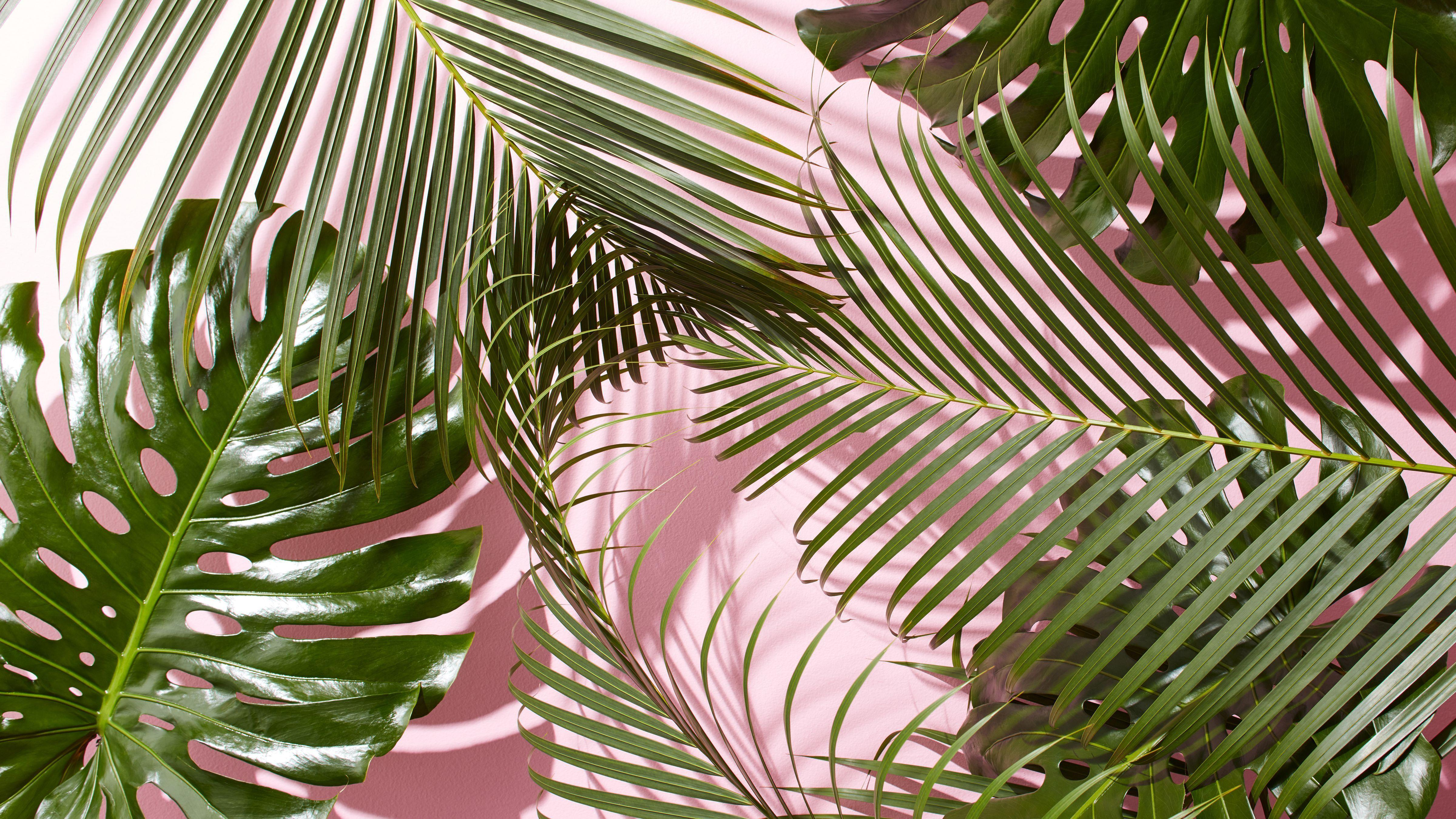 Tropical Aesthetic Wallpapers