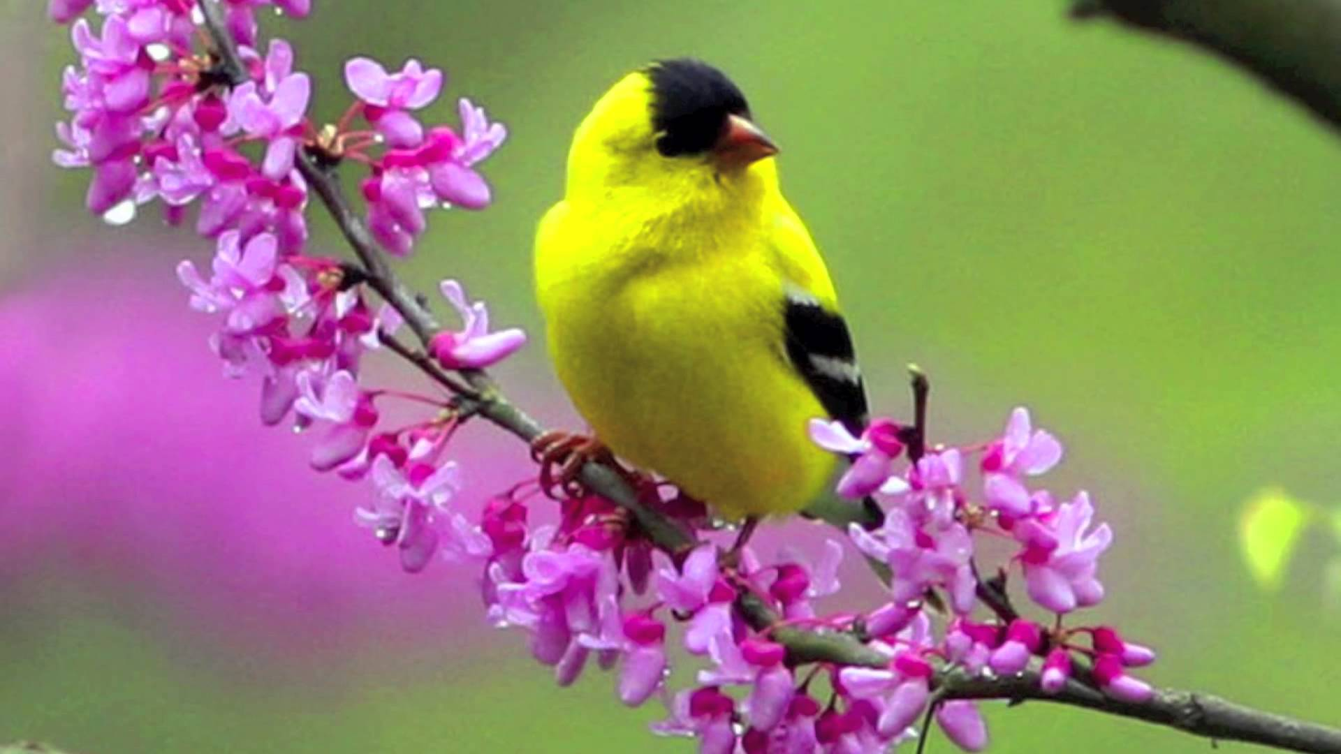 Flowers And Birds Wallpapers Wallpaper Cave