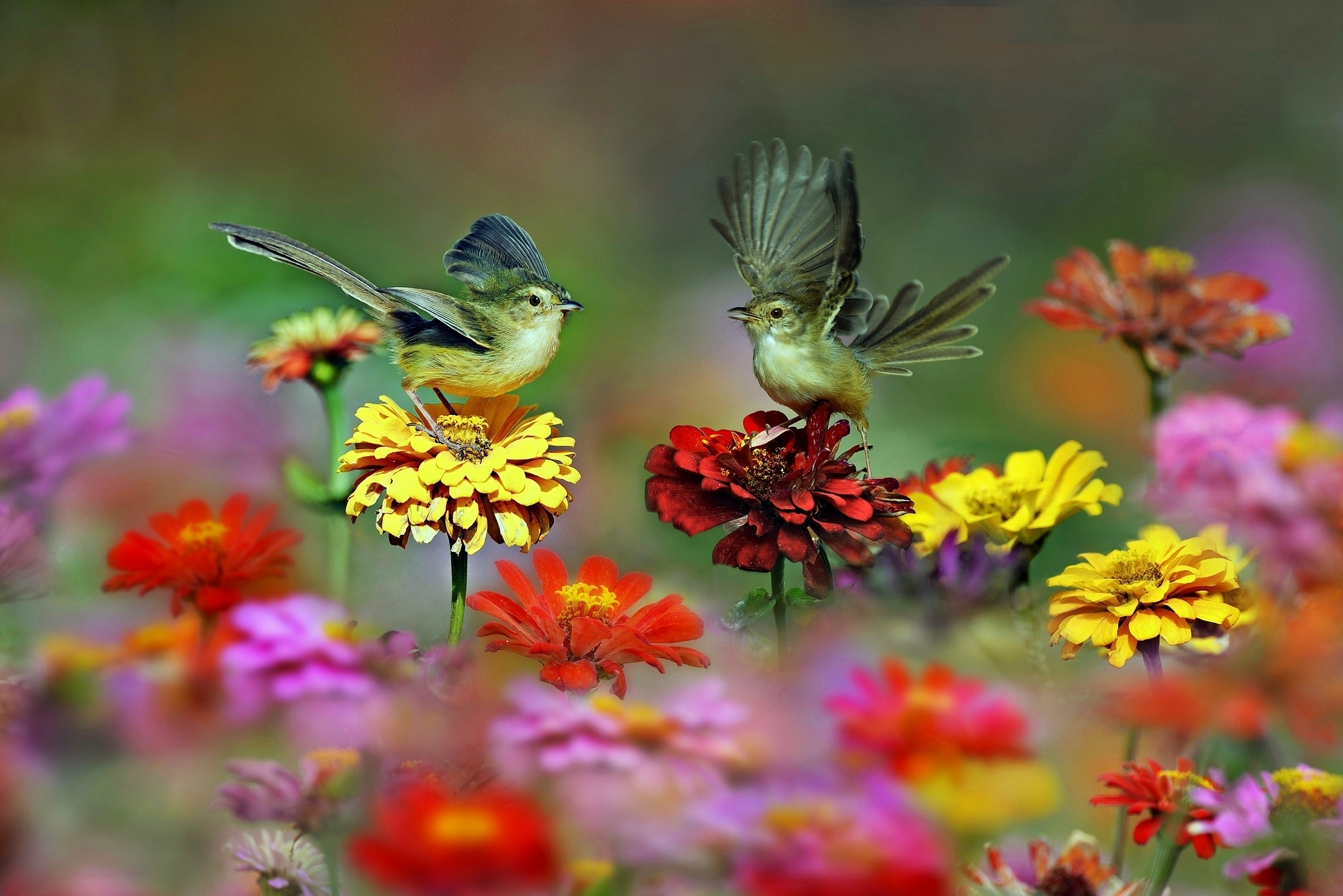 Flowers And Bird Wallpapers Wallpaper Cave Animals seasons flowers city and architecture holidays carshouse and comfort food & drink movies texture space motorcycles birds animeweapons and army brands and logos sports humor and satire children digital. bird wallpapers wallpaper cave