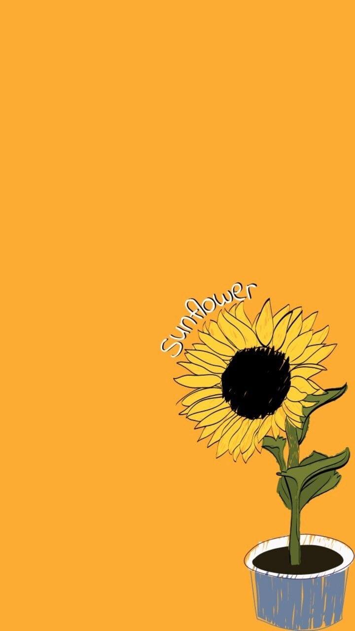Aesthetic Yellow Sunflower Backgrounds