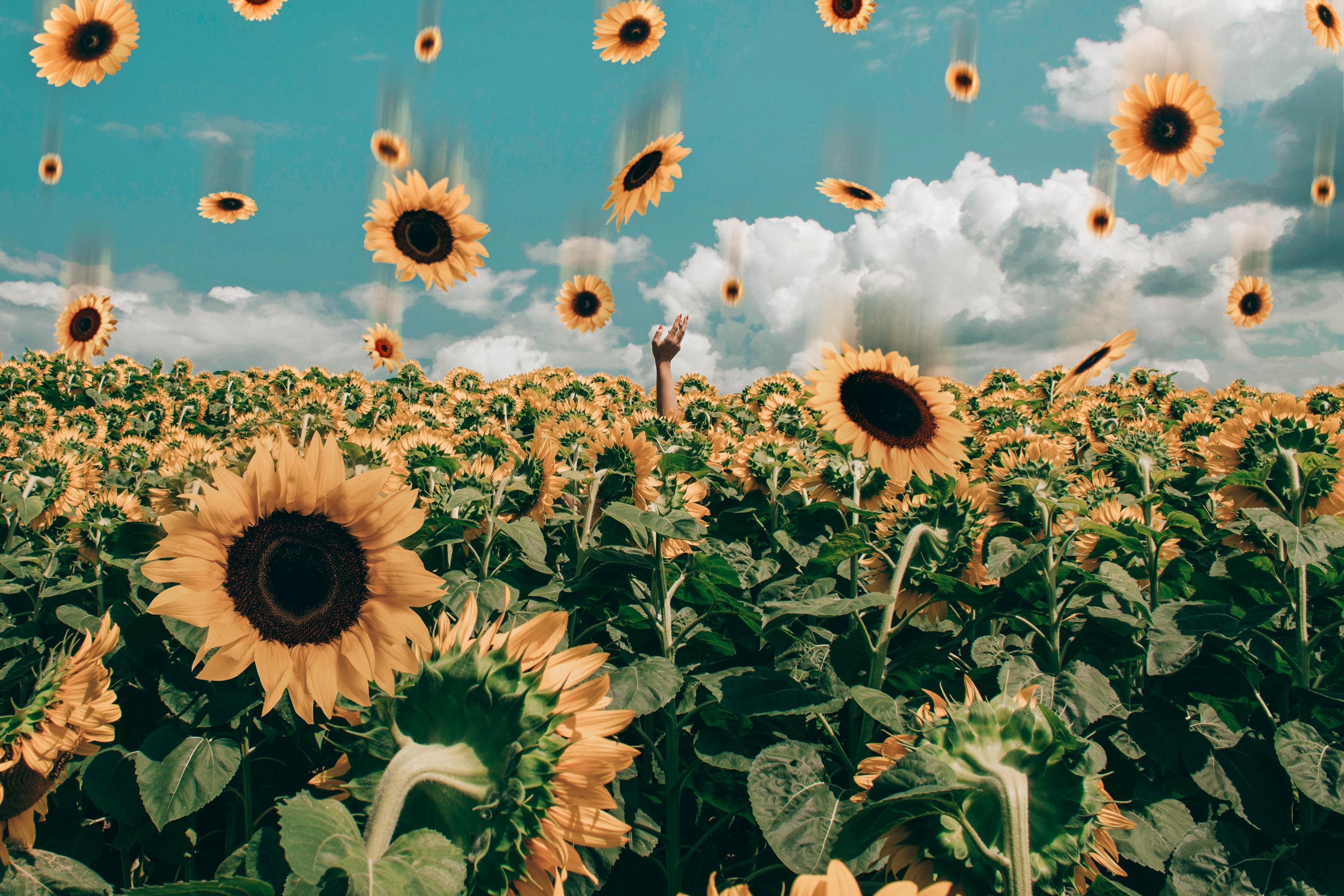 Laptop Sunflower Tumblr Wallpapers Wallpaper Cave