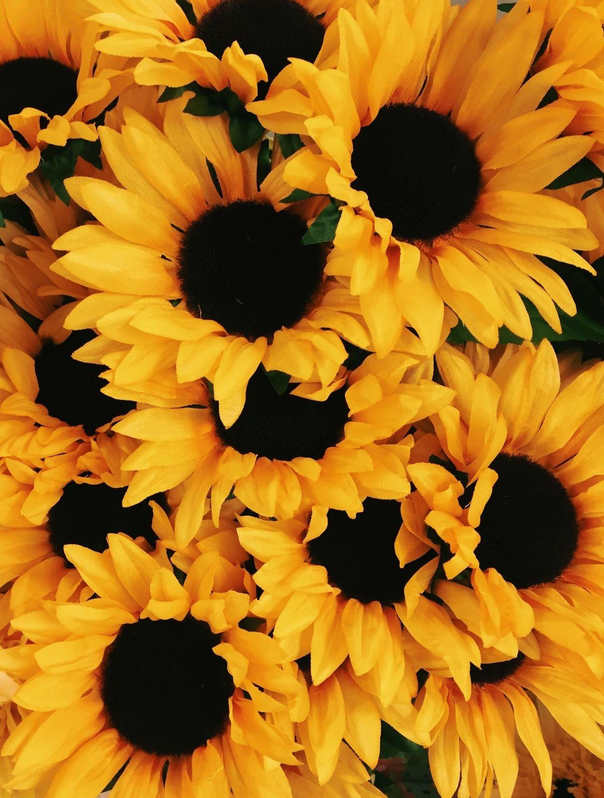 Aesthetic Sunflower Wallpapers - Wallpaper Cave