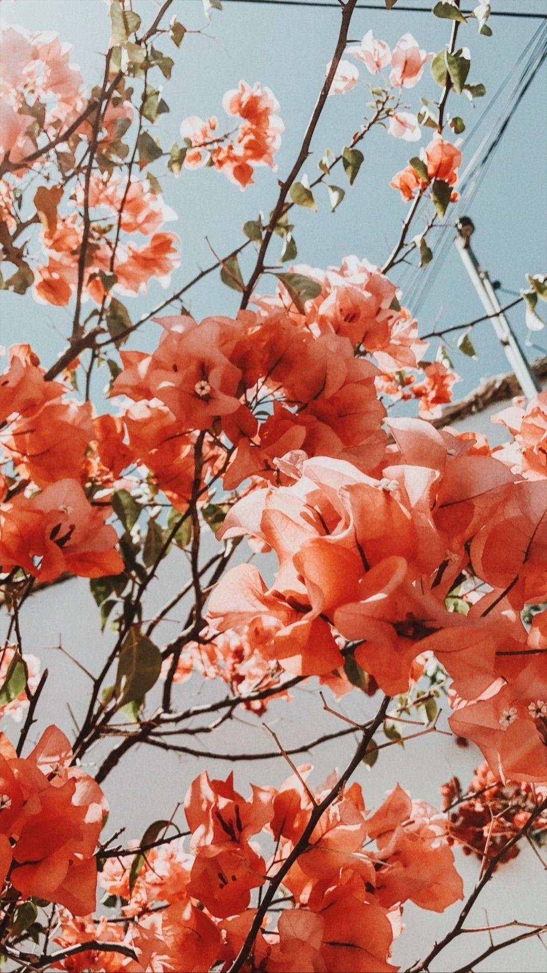 Aesthetic Spring Flowers Wallpapers - Wallpaper Cave