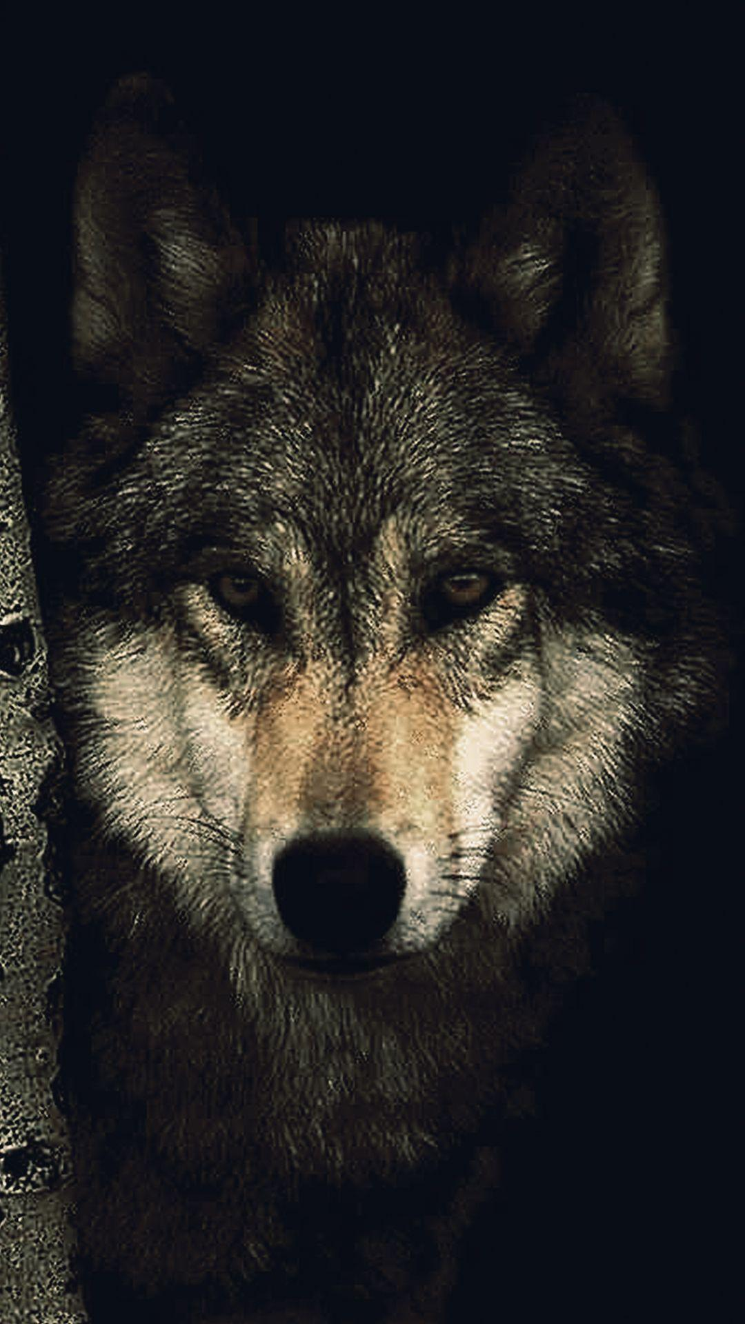 Hd Wolf Phone Wallpapers Wallpaper Cave