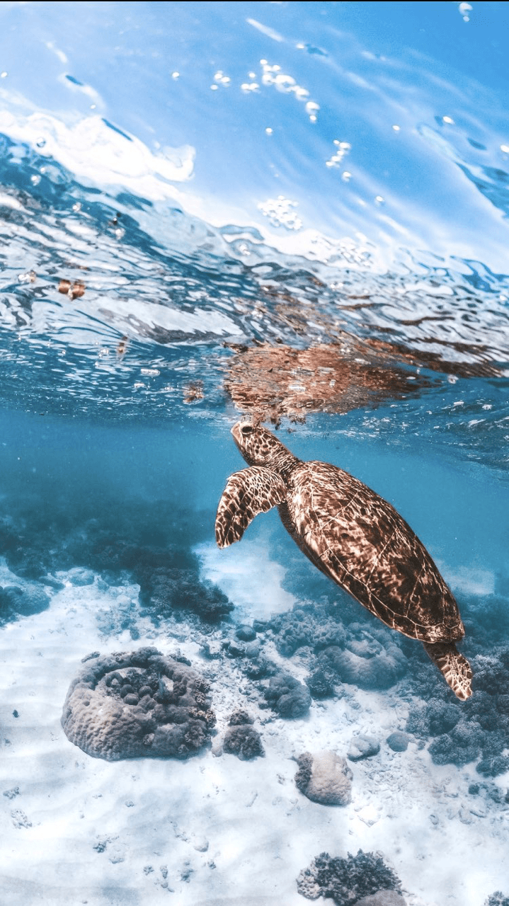 Sea Turtle Phone Wallpapers Wallpaper Cave