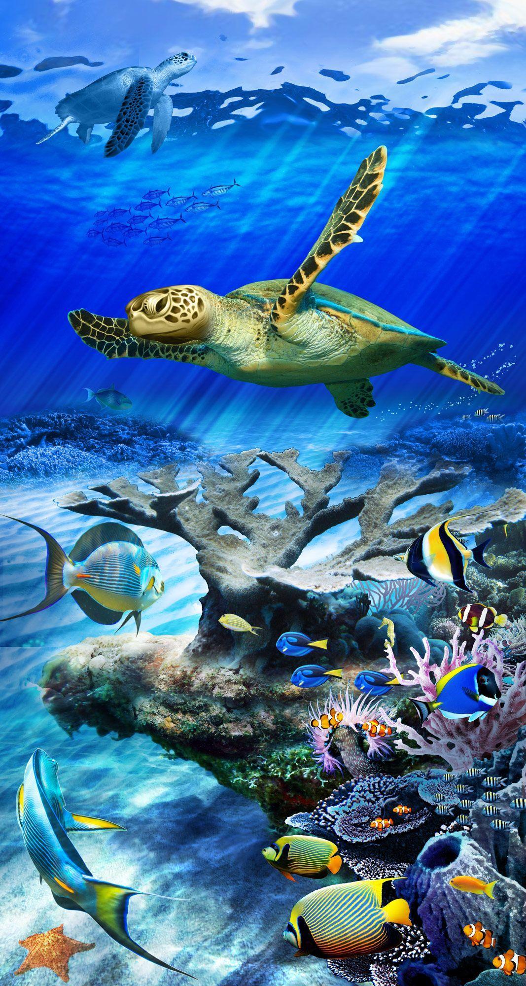 Sea Turtle Phone Wallpapers Wallpaper Cave