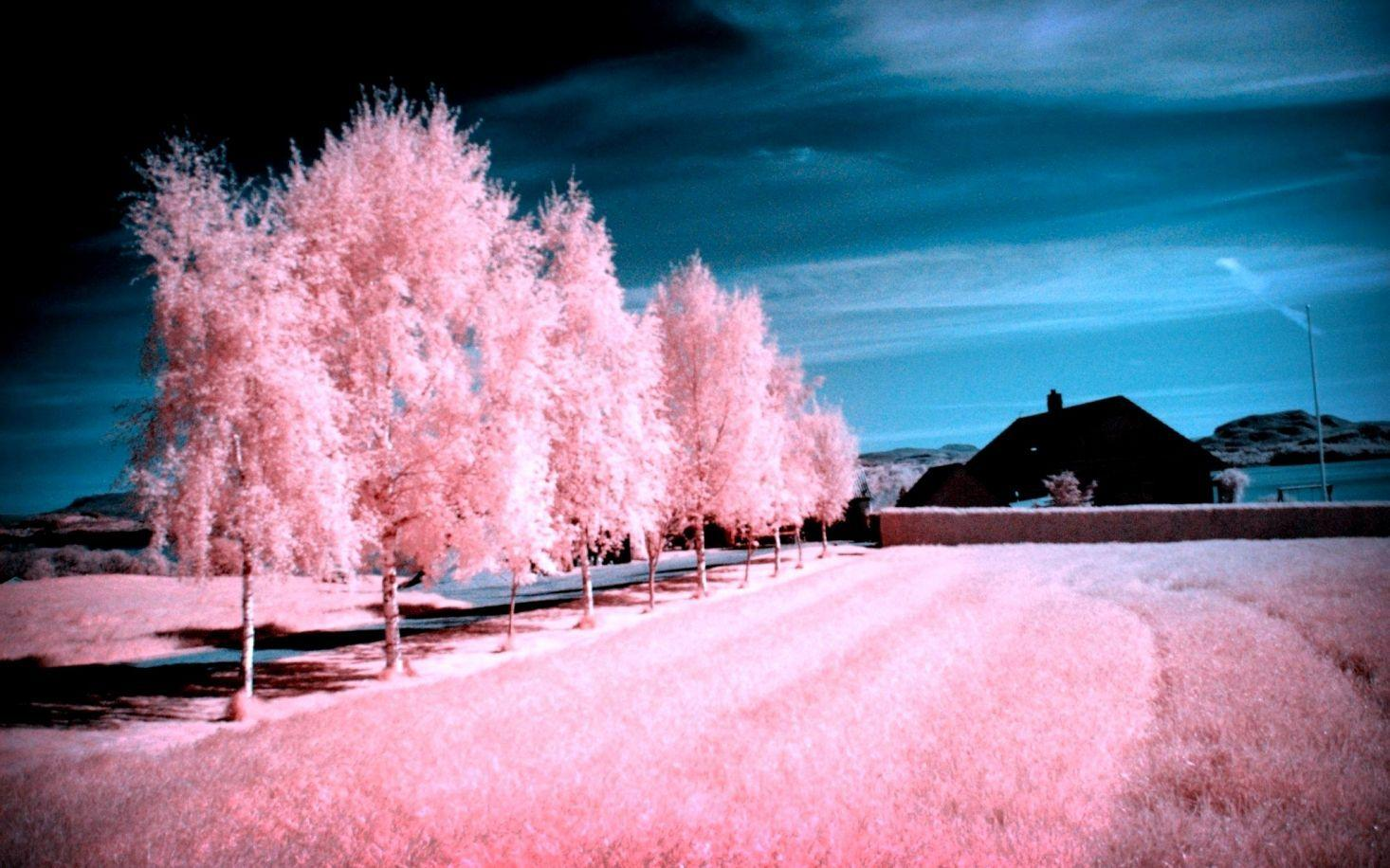 Pink Scenery Wallpapers Wallpaper Cave