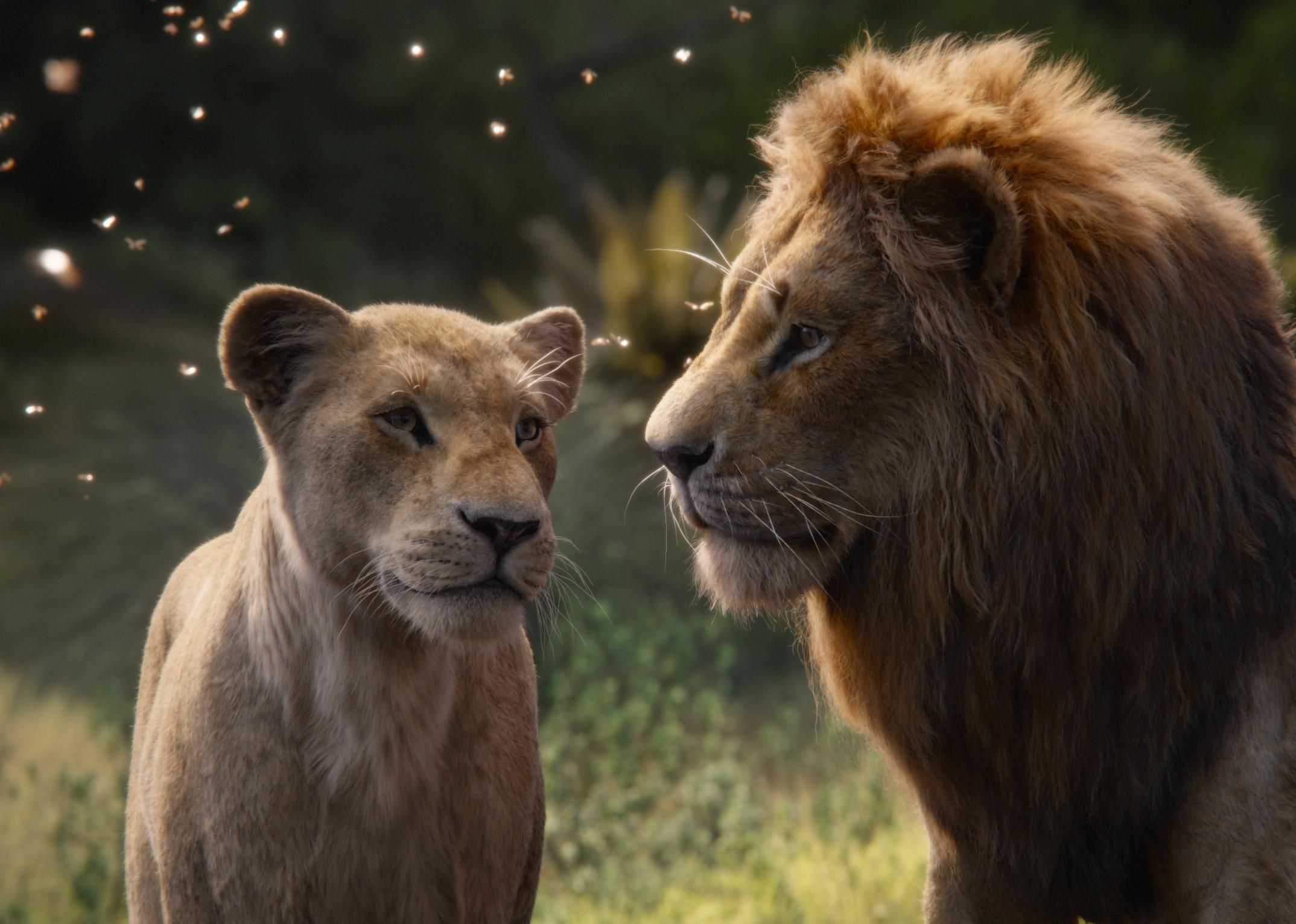The Lion King: Jon Favreau's Photo