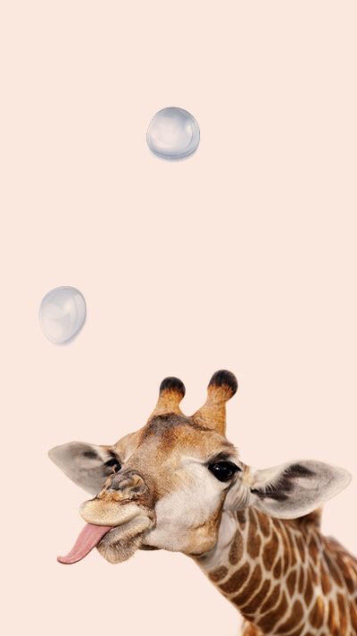 Playful giraffe with bubble wallpapers