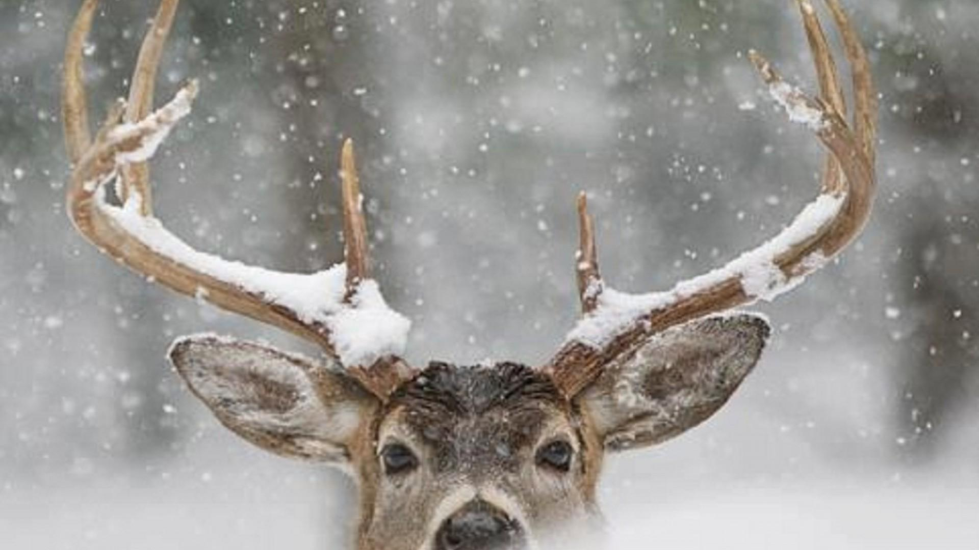 Winter Animal Wallpapers Widescreen Free Download > SubWallpapers