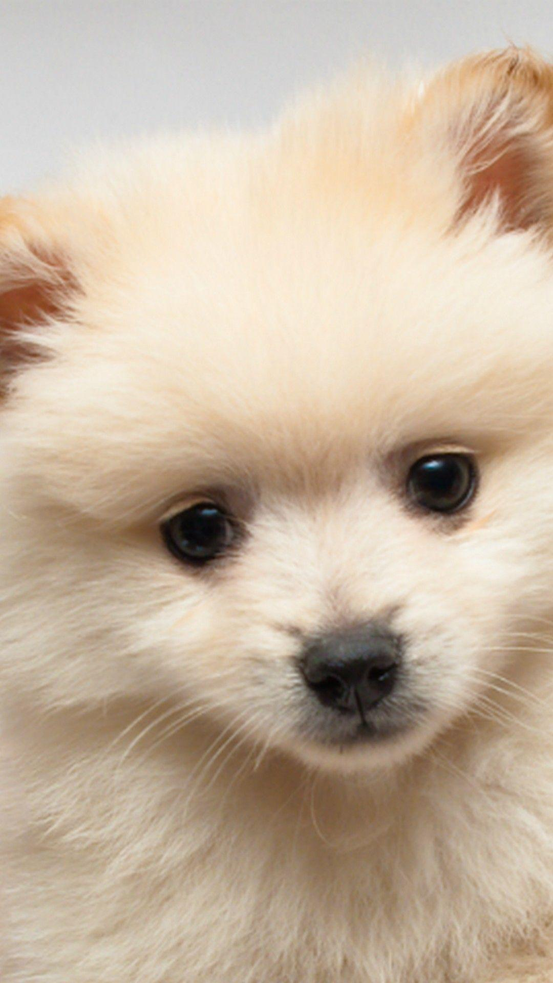 Puppy Phone Wallpapers Wallpaper Cave