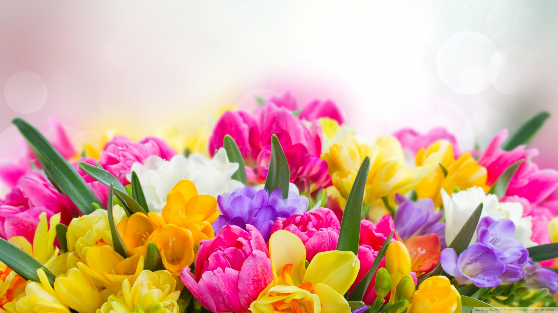 Spring Flowers 4k Wallpapers Wallpaper Cave