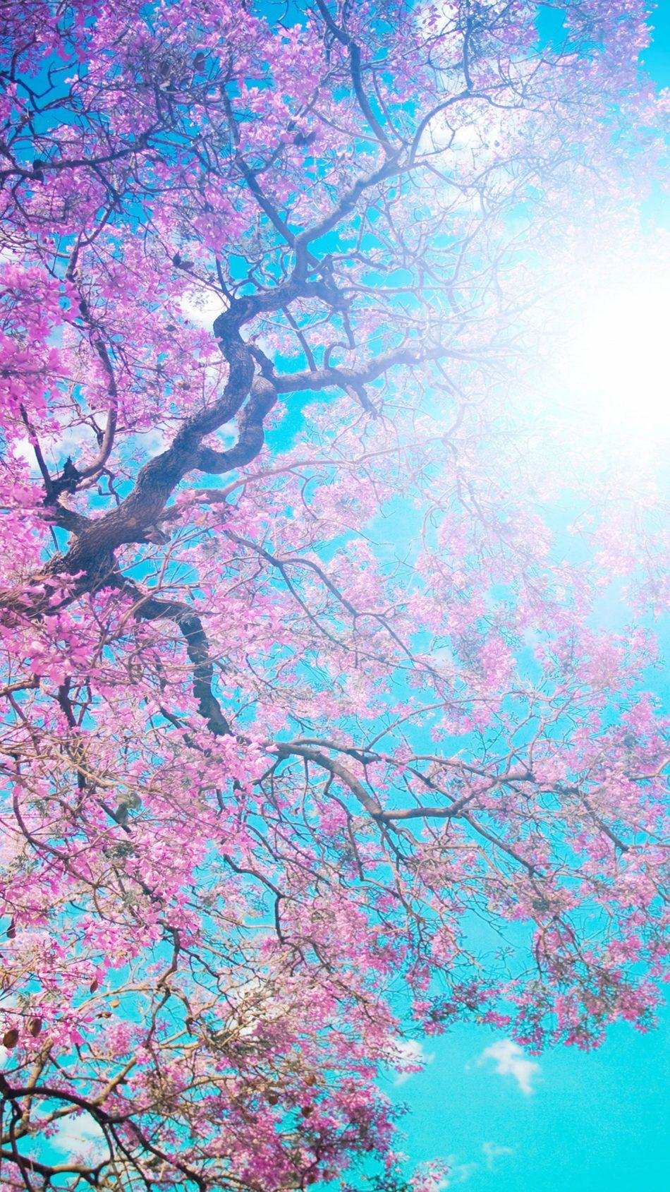 Tree Sunny Spring Day Free 4K Ultra HD Mobile Wallpapers