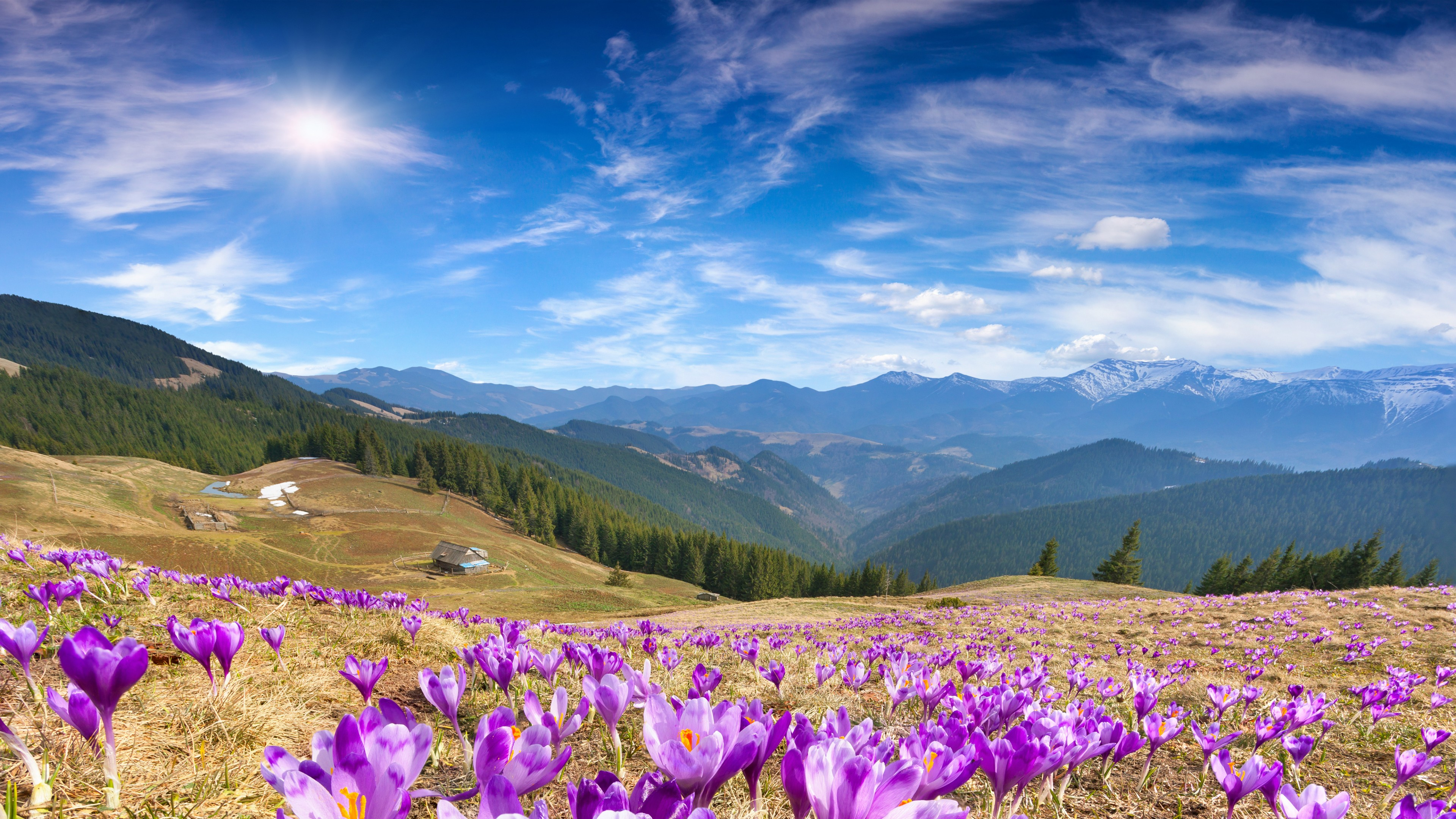 Wallpapers Crocus flowers, Mountains, Spring, Sunny day, 5K, Nature