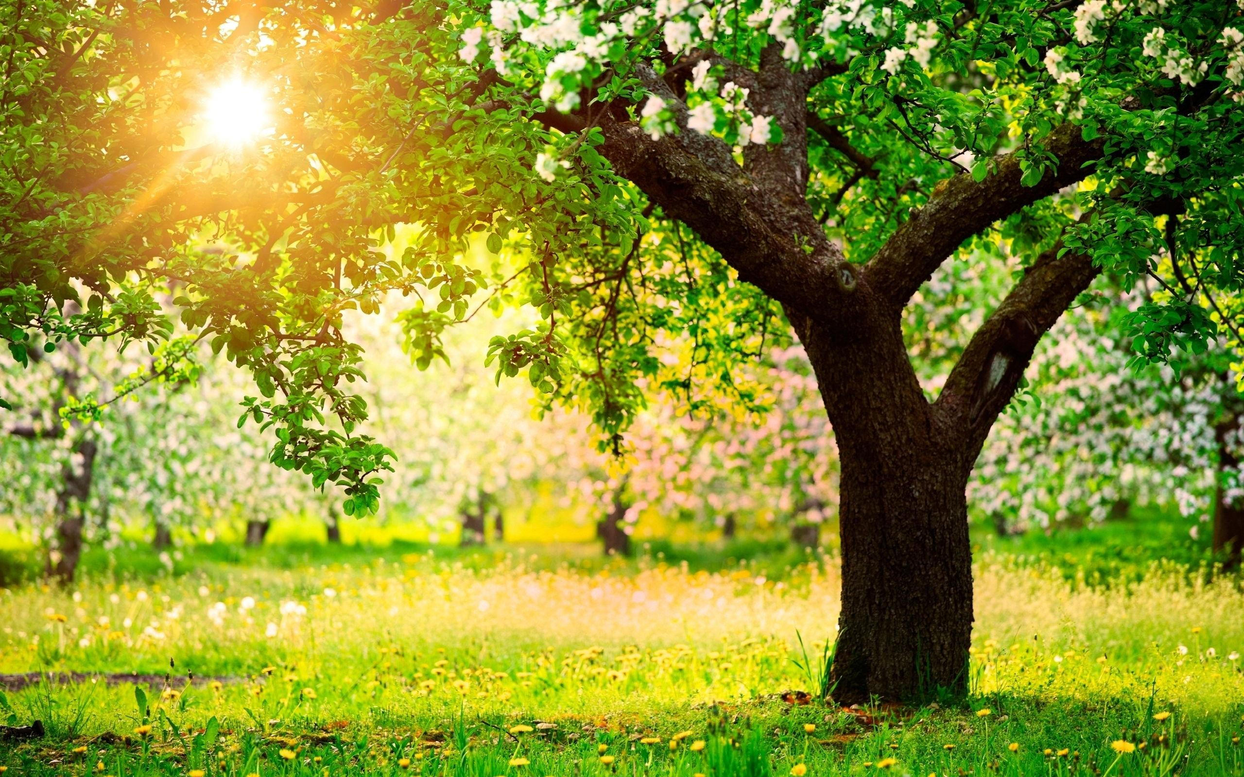 Trees Grass Flowers Sunny Day wallpapers