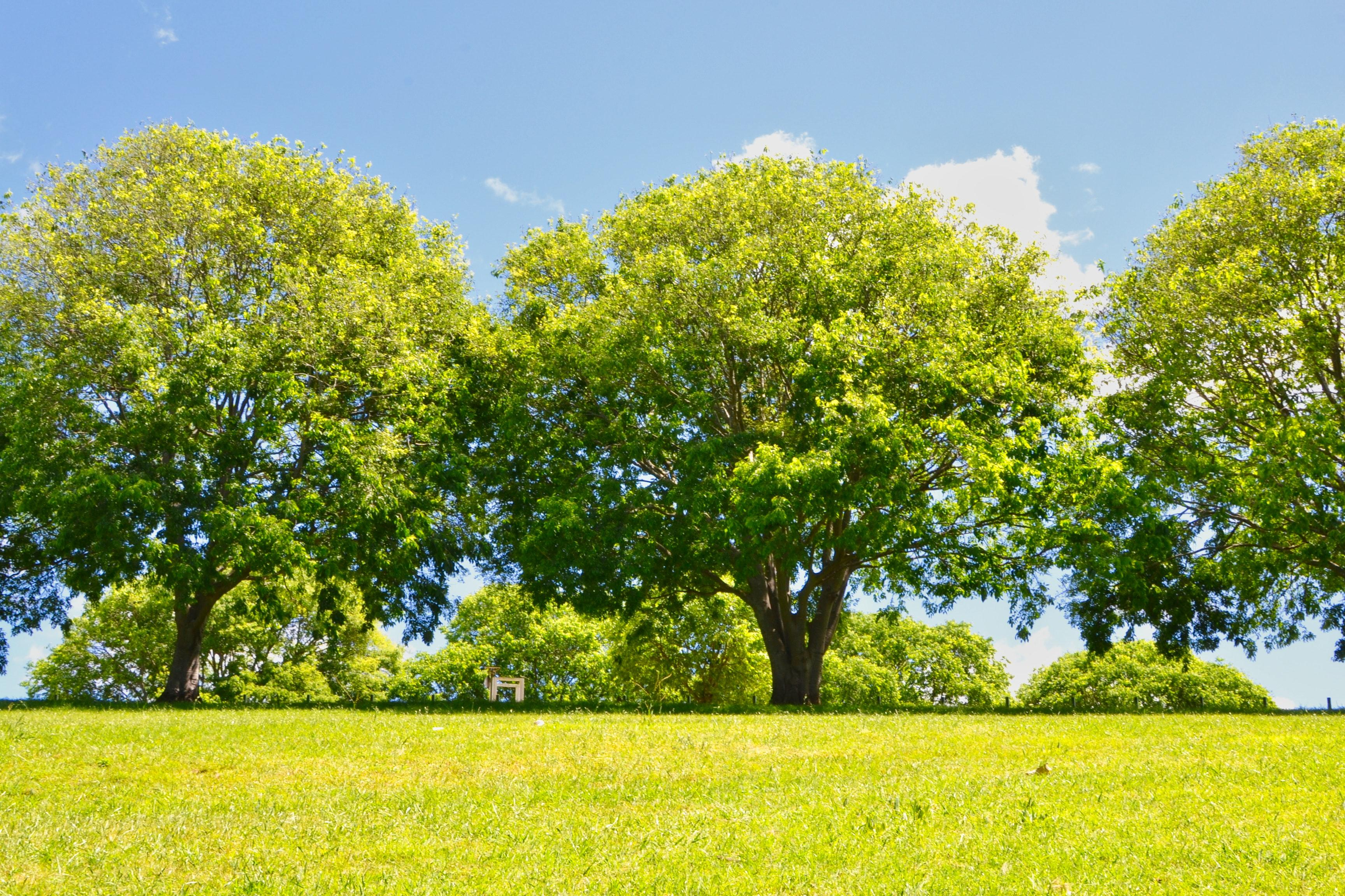 Free stock photo of park, sunny day, trees