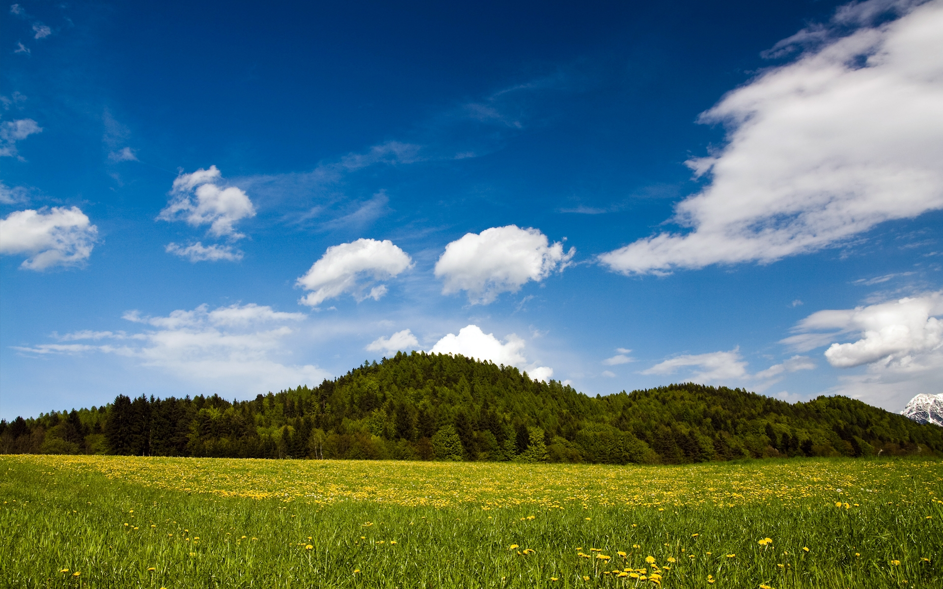 Nature Backgrounds In High Quality: Sunny Day by Todd Allen