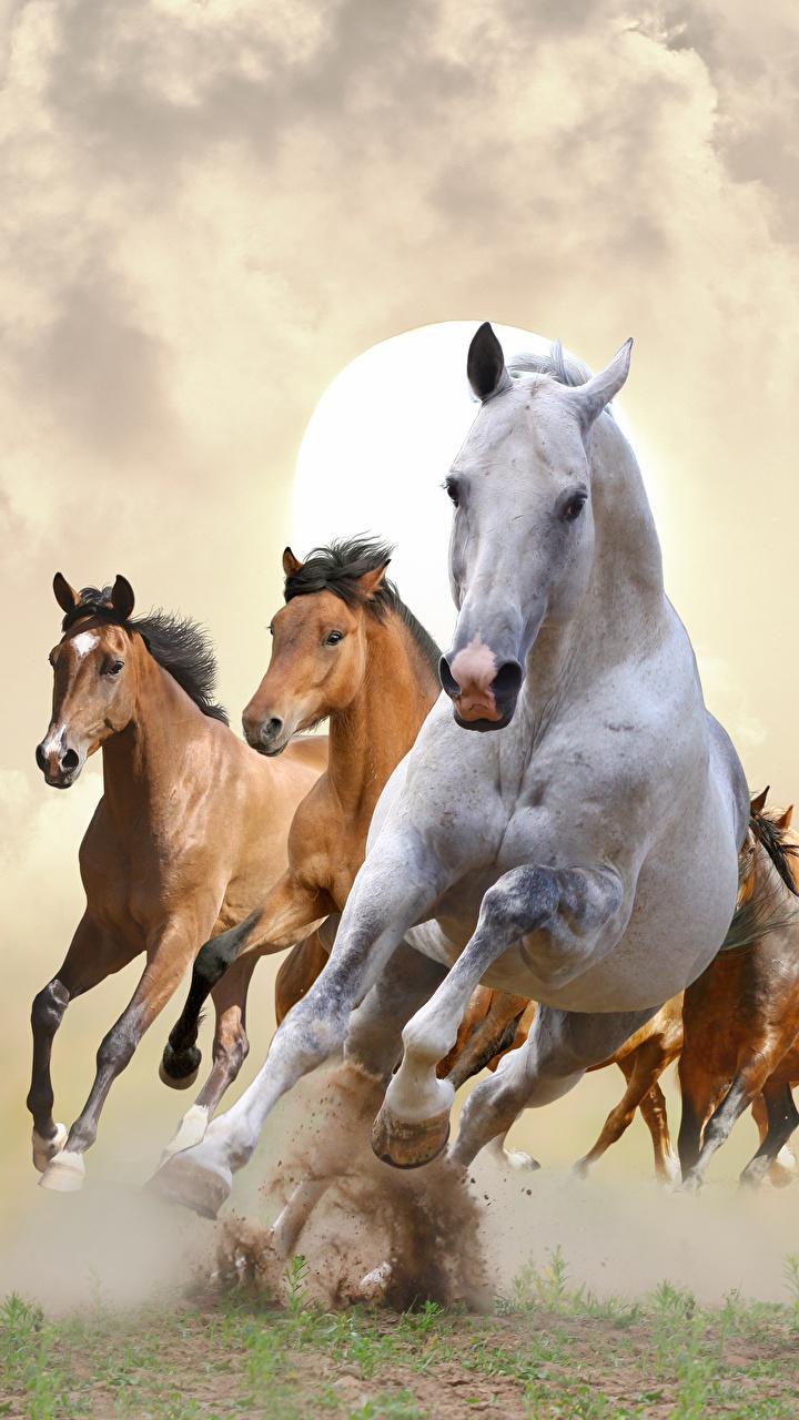 Iphone Running Horse Wallpaper Hd Tukinem Wallpapers