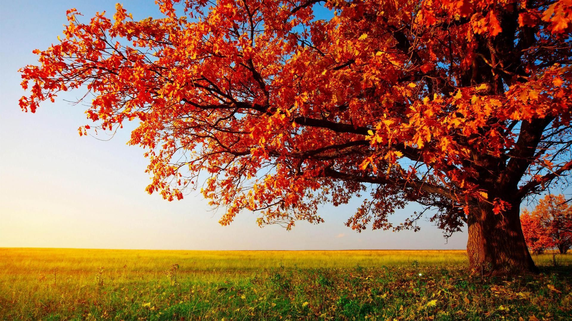 Hd Wallpapers For Pc Beautiful