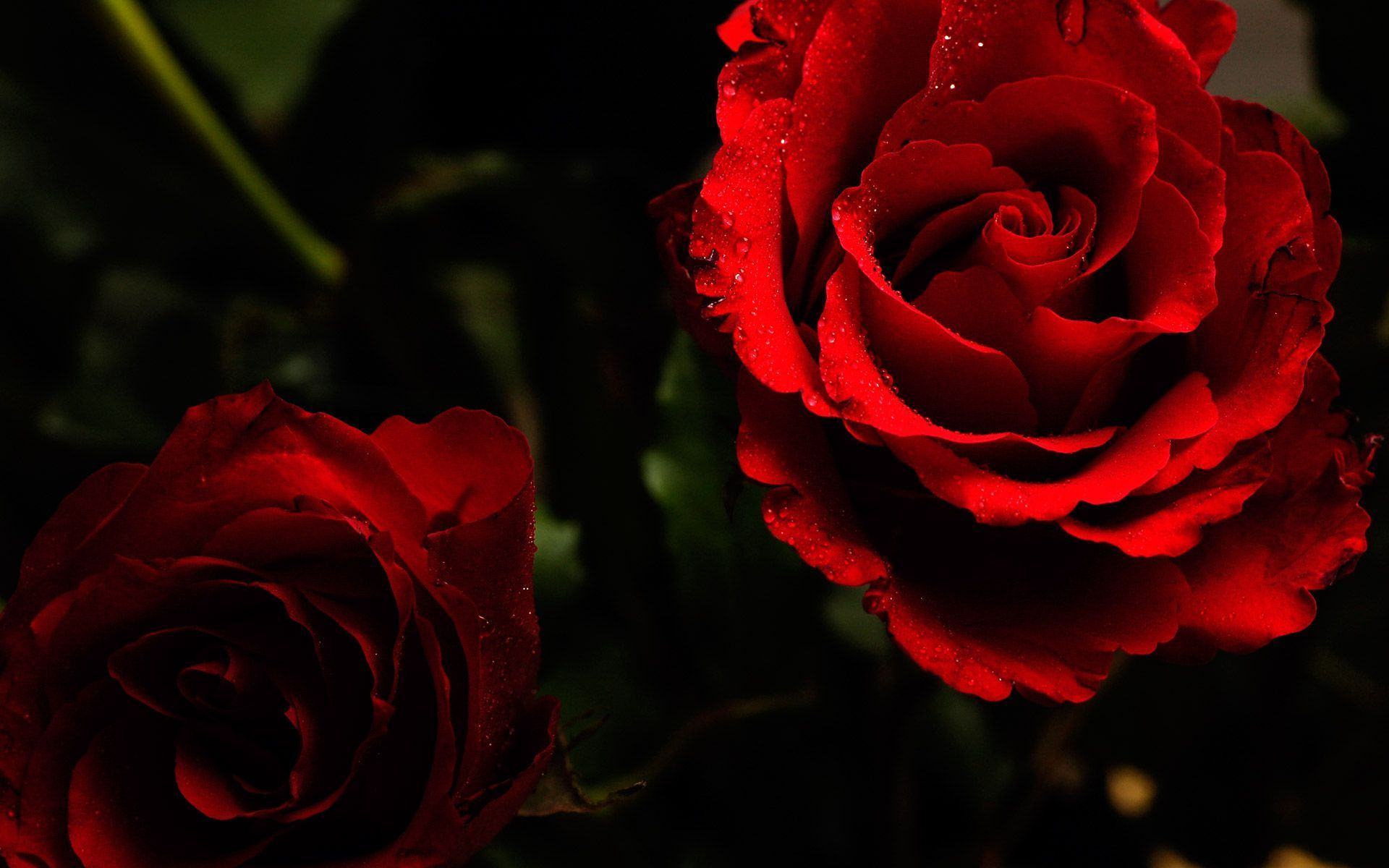 Aesthetic Roses Wallpapers - Wallpaper Cave