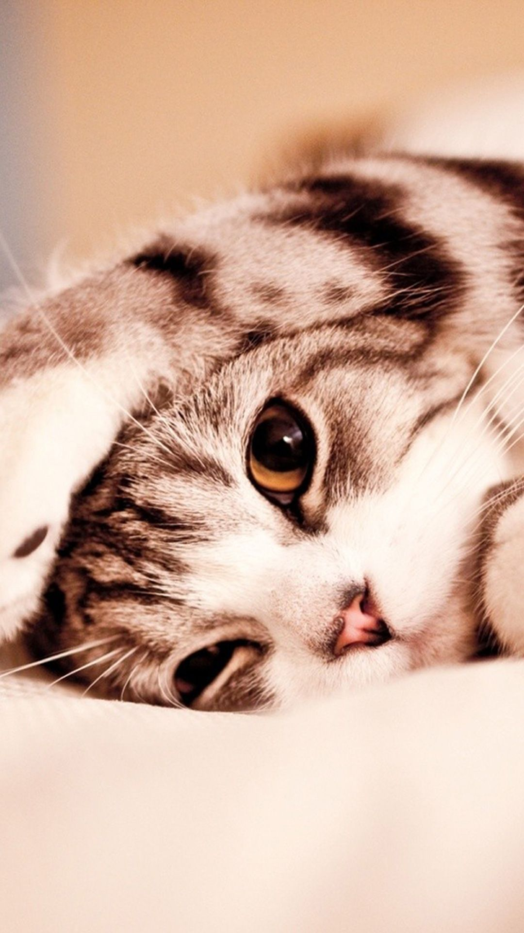 Hd Cute Cat Android Wallpapers Wallpaper Cave