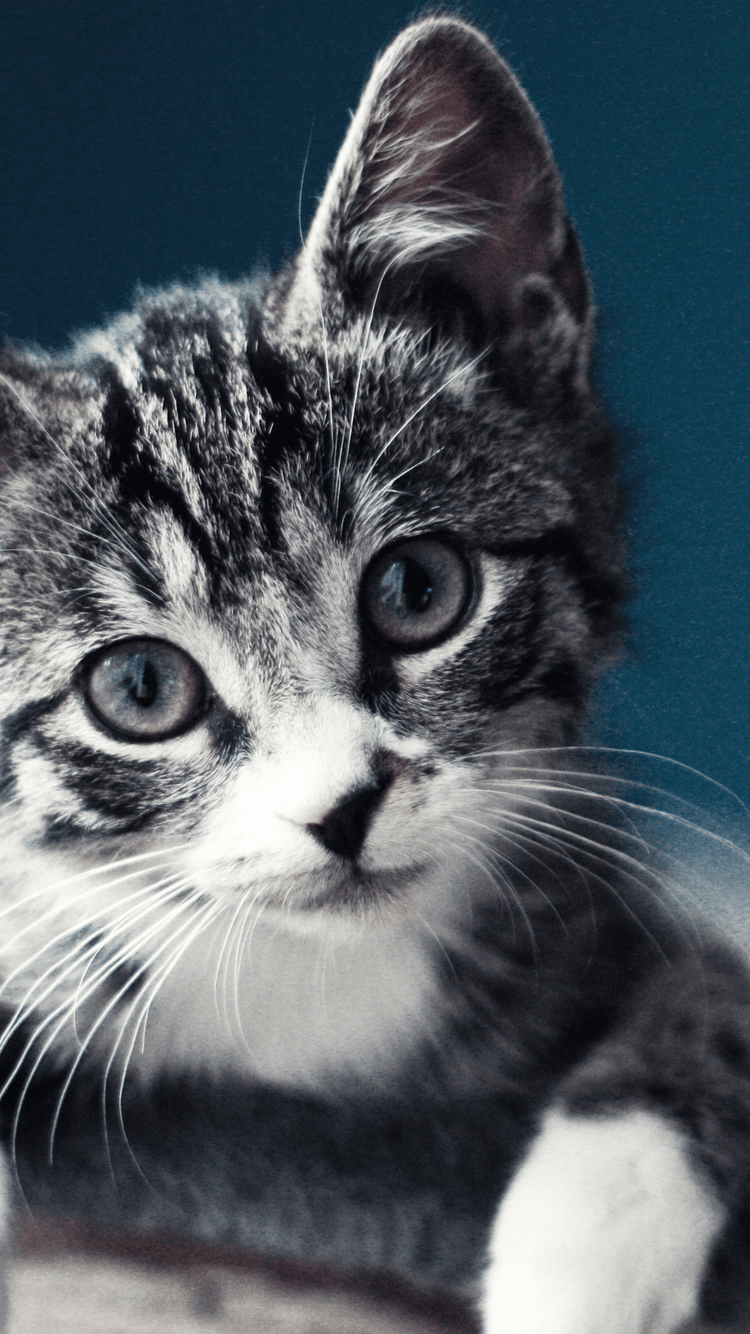 HD Cute Cat Android Wallpapers - Wallpaper Cave