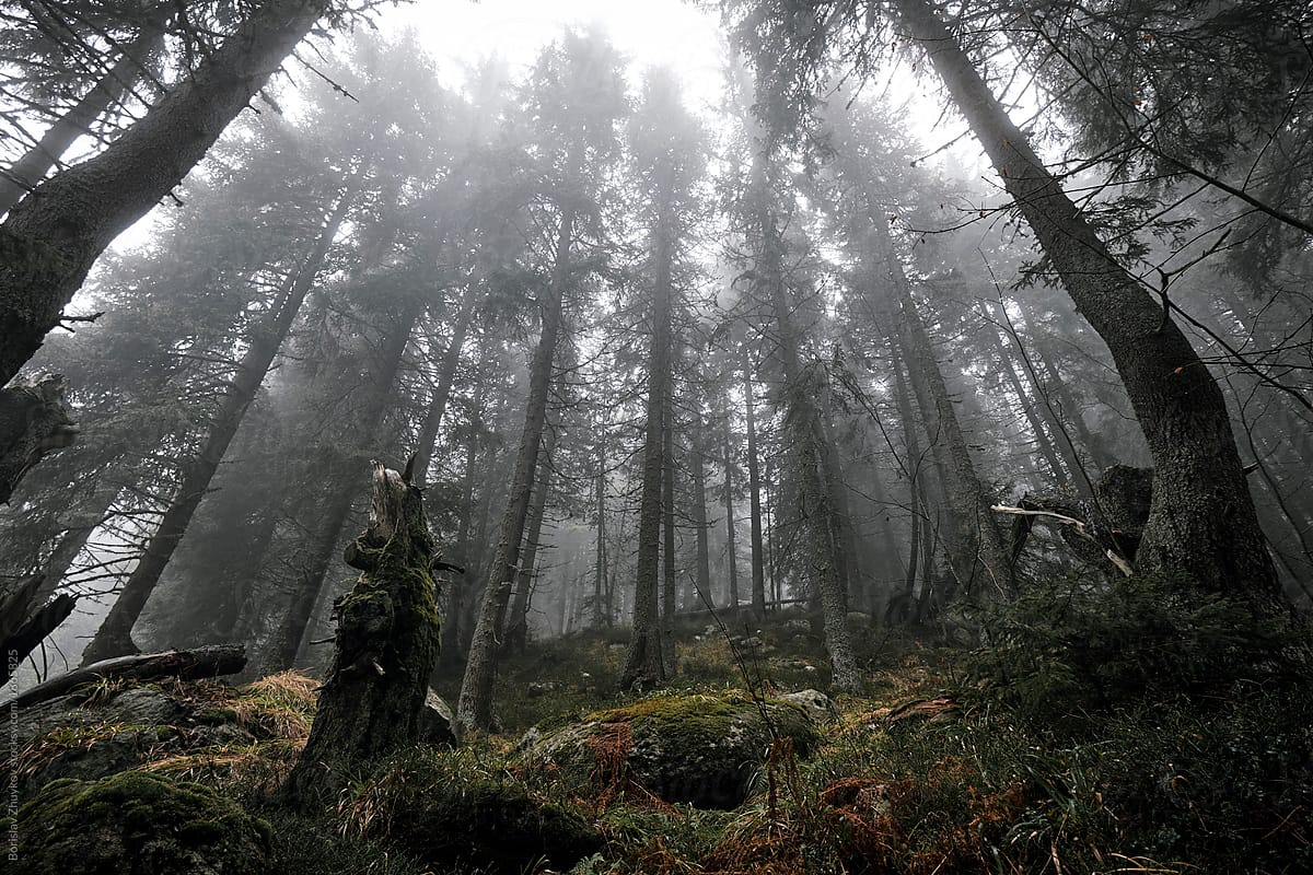 Mysterious Light Foggy Forest Wallpapers - Wallpaper Cave