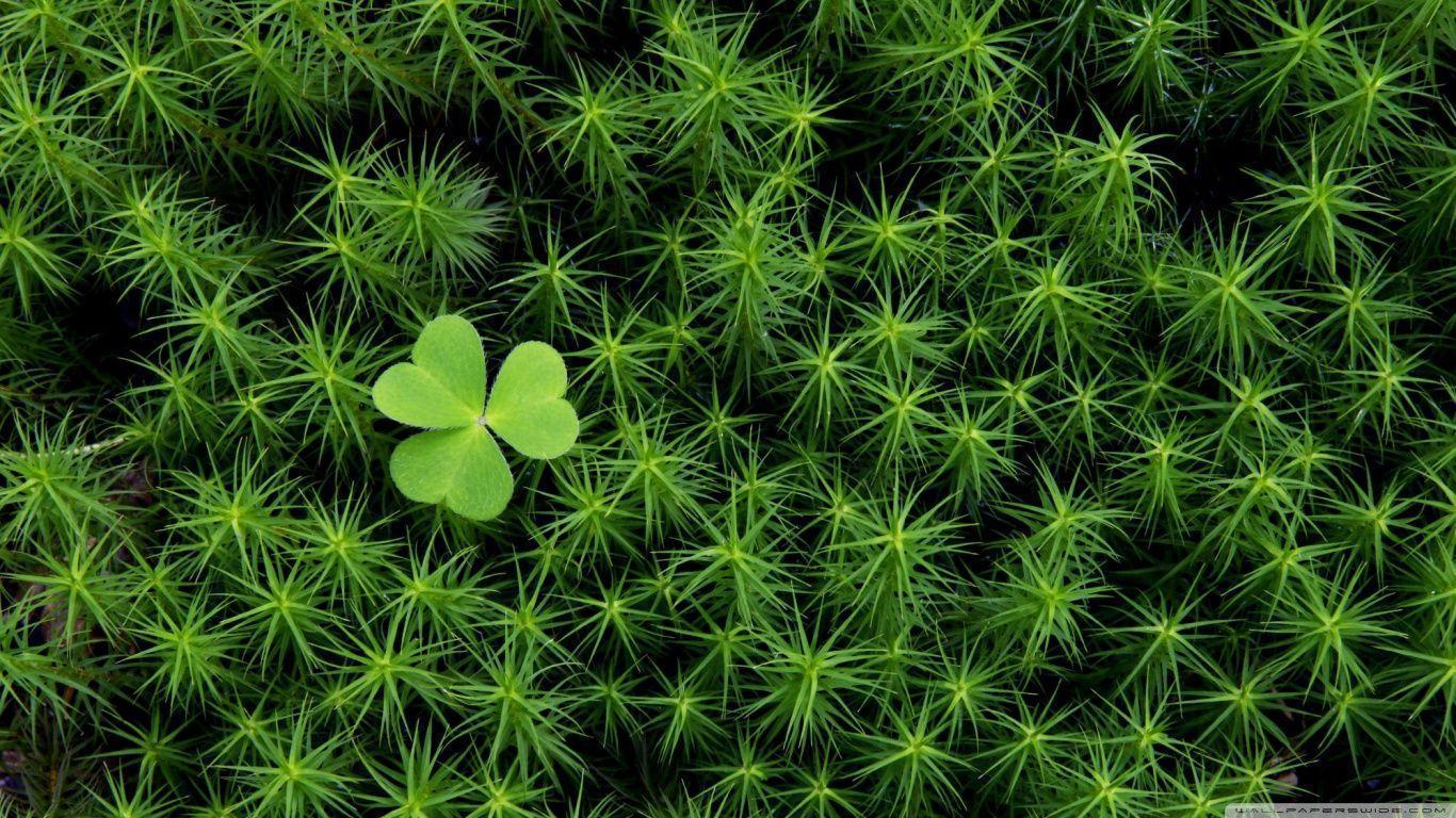 Shamrock And Irish Moss HD desktop wallpaper : Widescreen : High ...